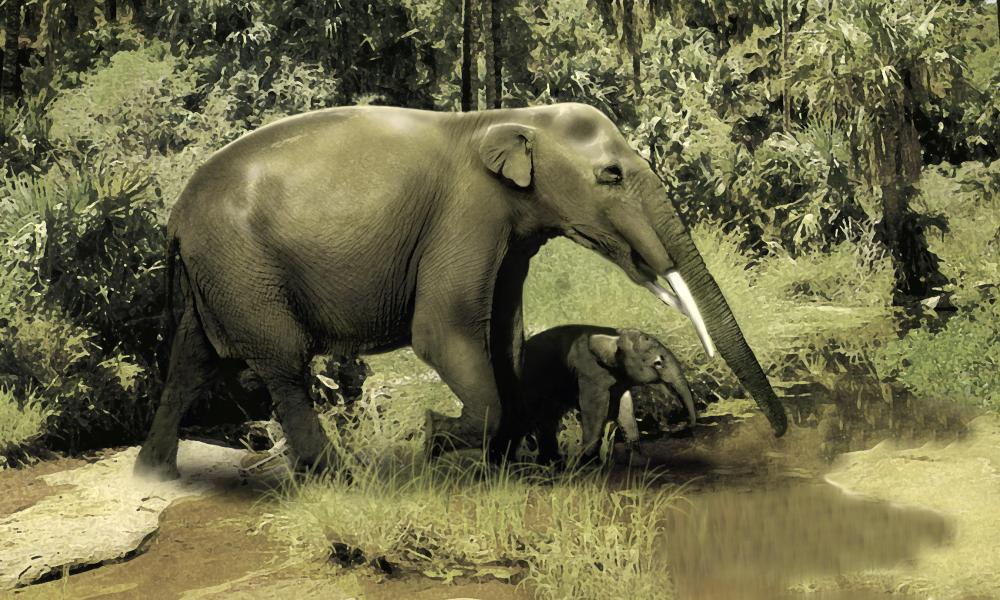 An artist's impression of a gomphotherium
