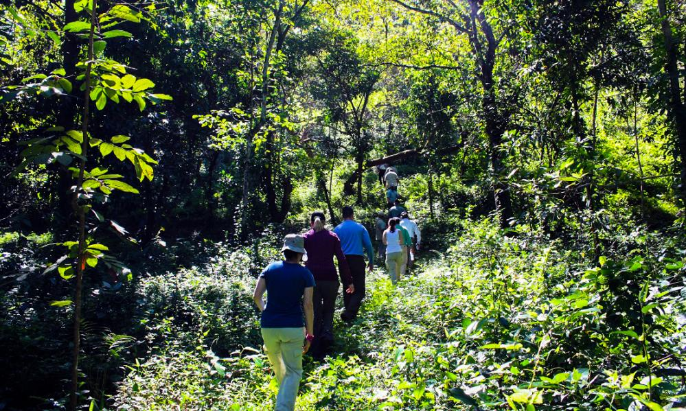 So far, Avery Dennison's support has helped Rainforest Alliance achieve FSC certification for 40,000 hectares. Rainforest Alliance expects to achieve certification for 100,000 hectares by the end of 2016.