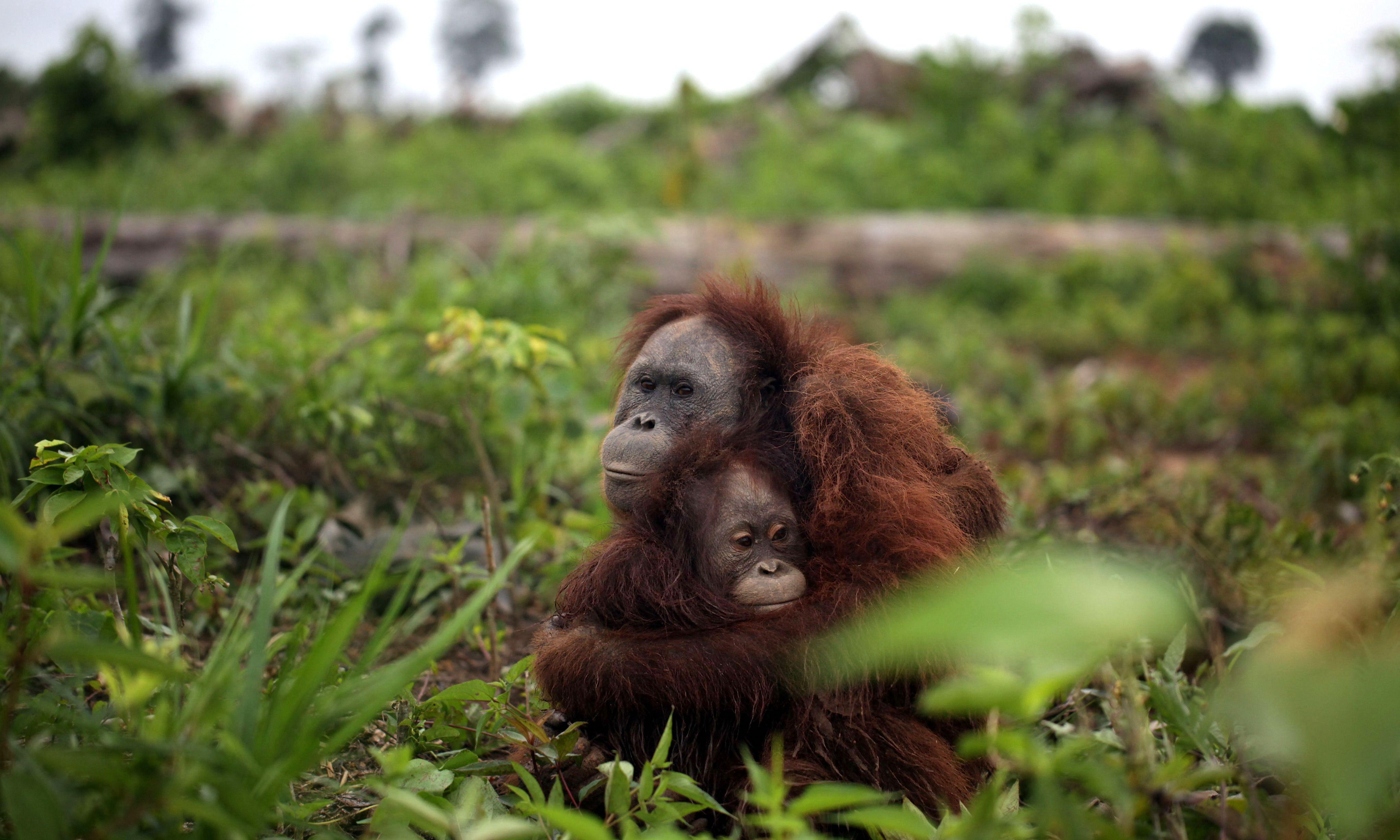 World's largest ecological study aims to make palm oil wildlife-friendly
