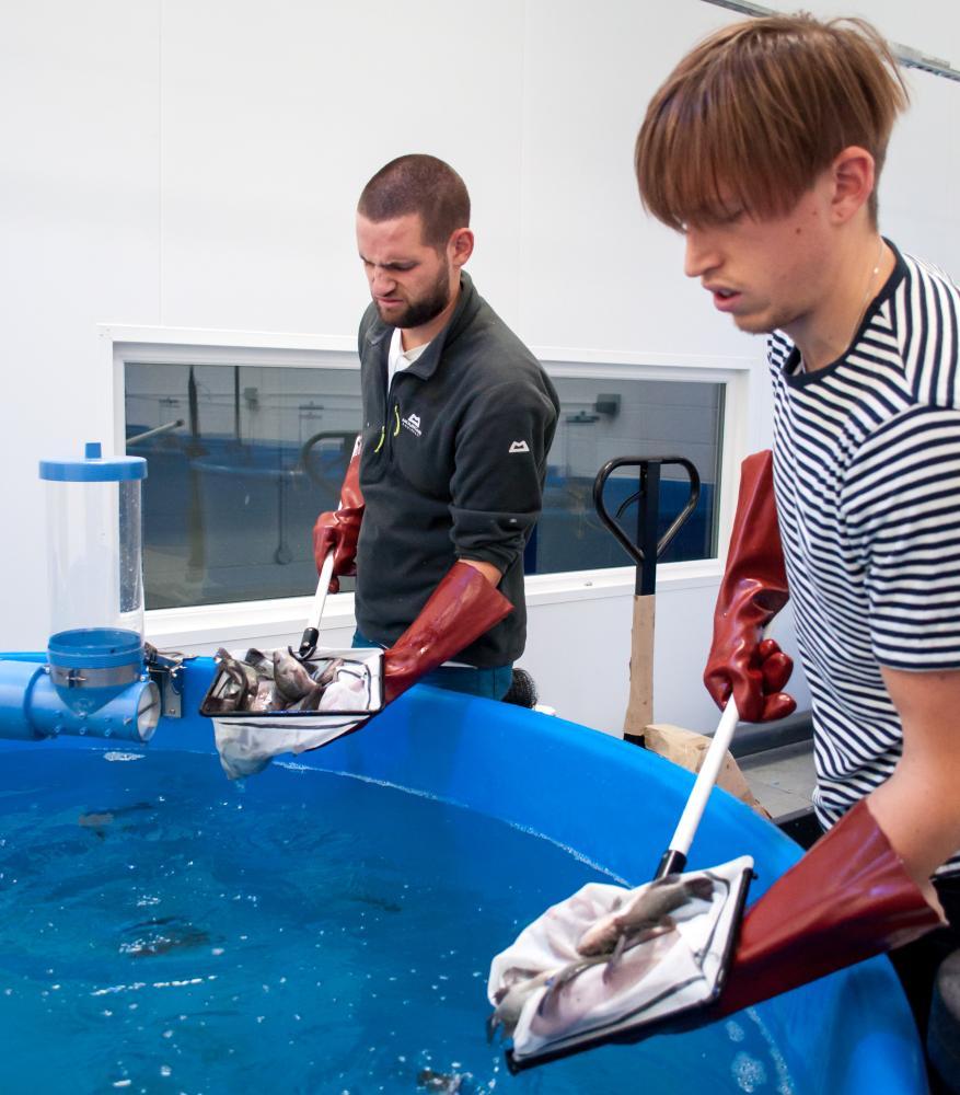 Two man farming fish inside an urban farm