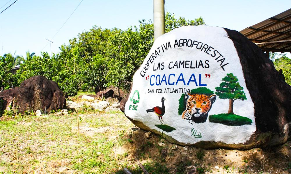 Las Camelias is a sustainable forestry cooperative in La Ceiba, near Pico Bonito National Park. The cooperative is certified to the Forest Stewardship Council (FSC) standards, thanks to Rainforest Alliance's training. Around 30% of Las Camelias' employees are women: a rarity in the forestry industry.