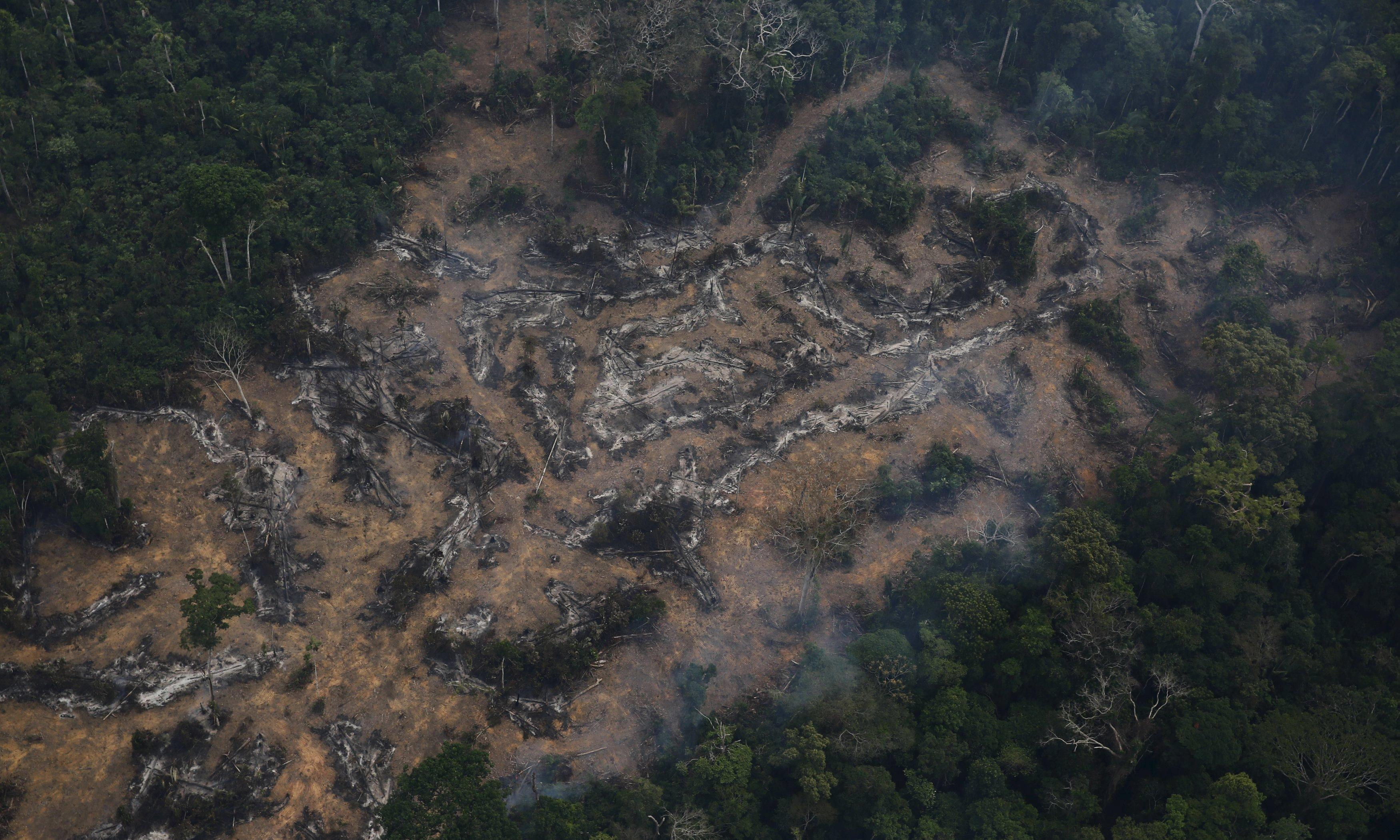 a report on the deforestation in brazil Deforestation will have increasingly serious consequences for biodiversity, humans, and climate the fao report is based on statistics provided by countries themselves brazil, the leader, cleared over 42 million hectares, an area the size of california.