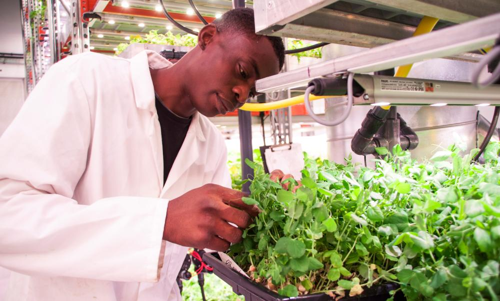 Man tends to plants in indoor farm.