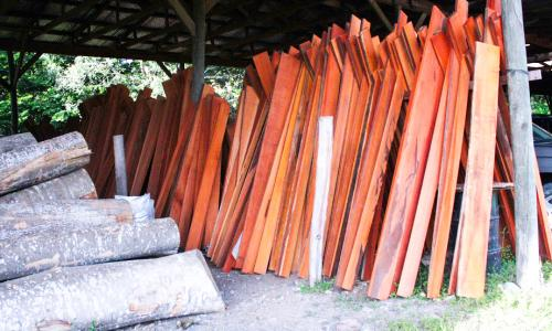 UNICAF, another cooperative working with Rainforest Alliance, is a sustainable forestry success story. It is FSC-certified and sells wood internationally. UNICAF manages one of the world's most important remaining mahogany stocks and is part of the supply chain for Gibson Guitars and other companies.