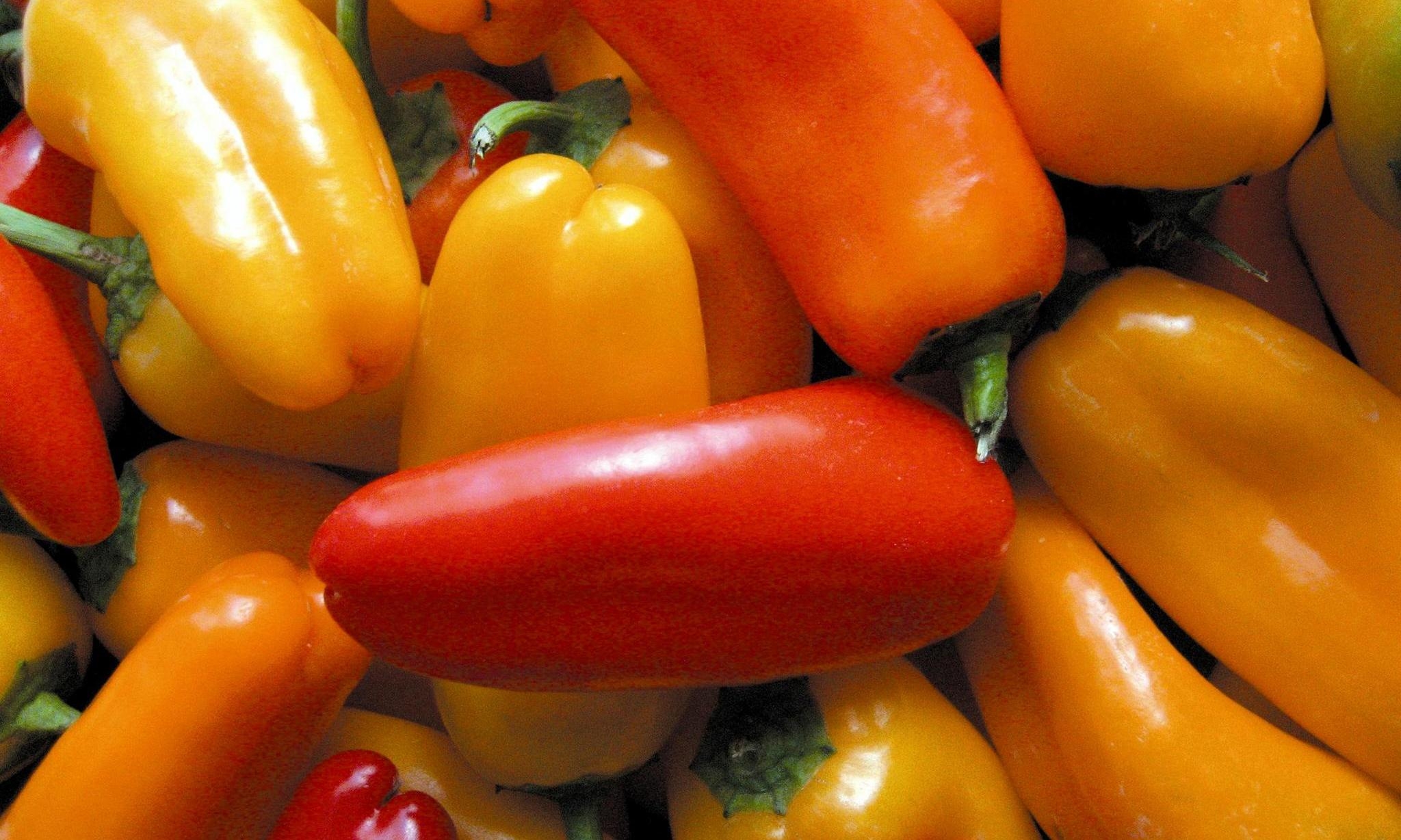 Frequent spicy meals linked to human longevity