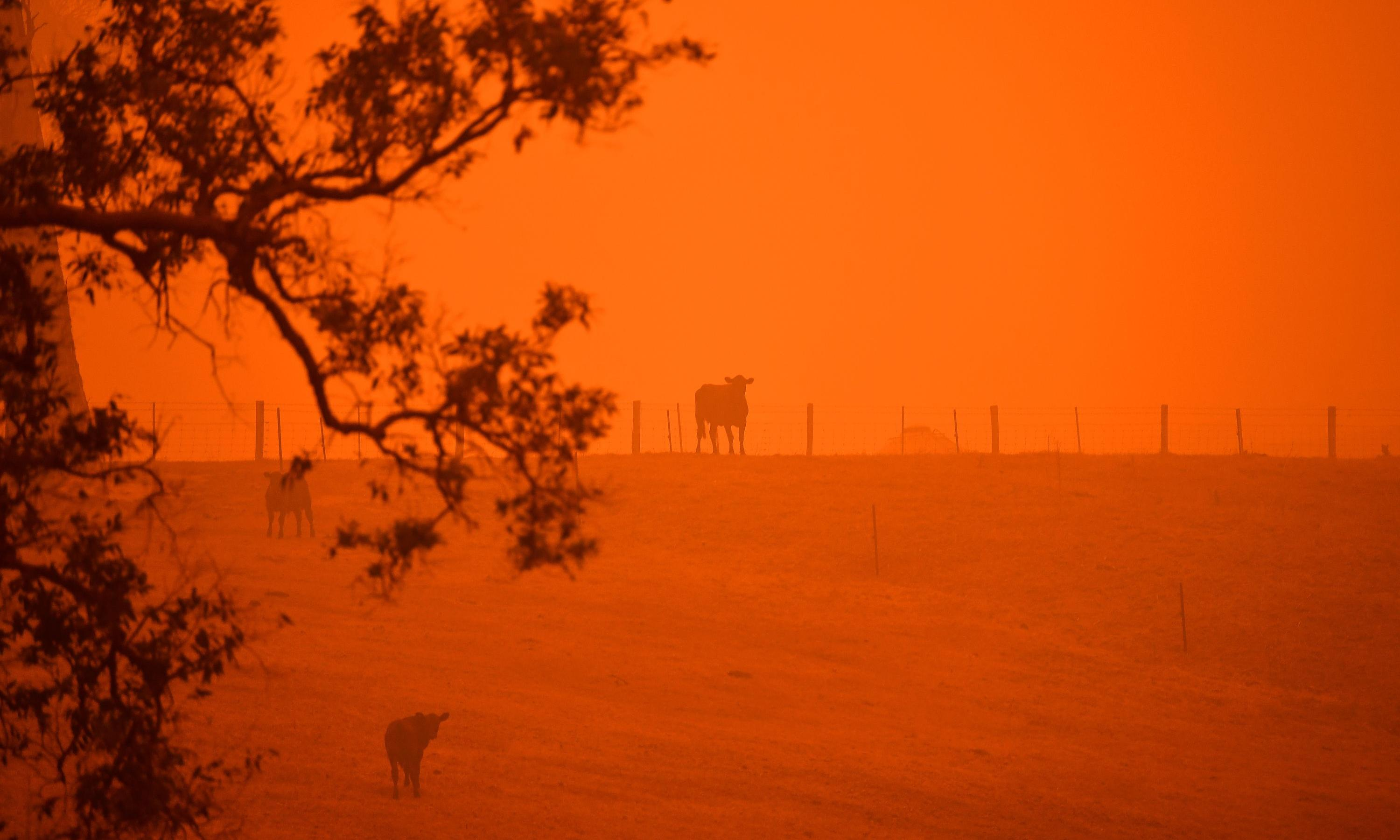 Disinformation on Australian bushfires should not be spread by ministers