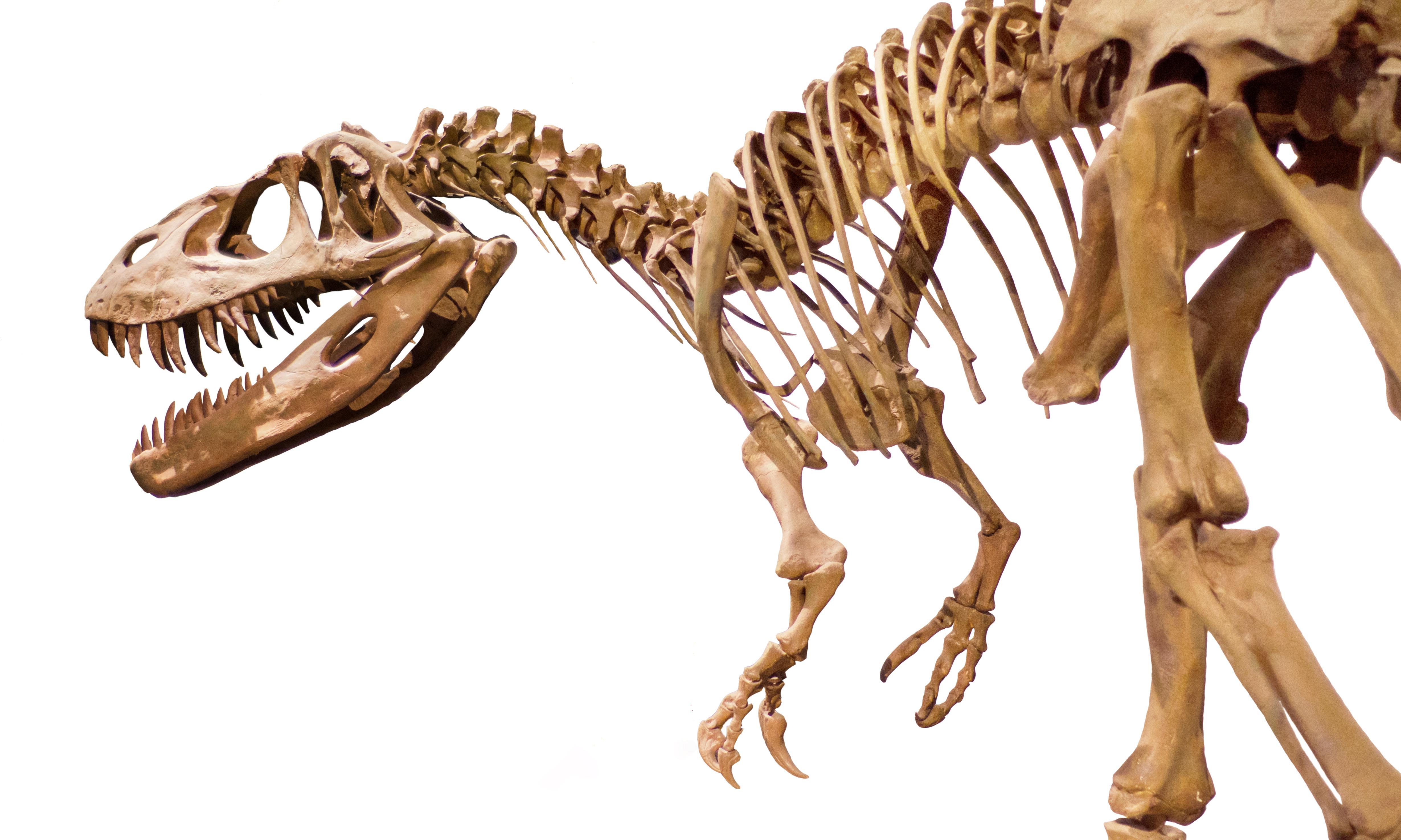 T rex traders: should the sale of dinosaur bones be stopped?