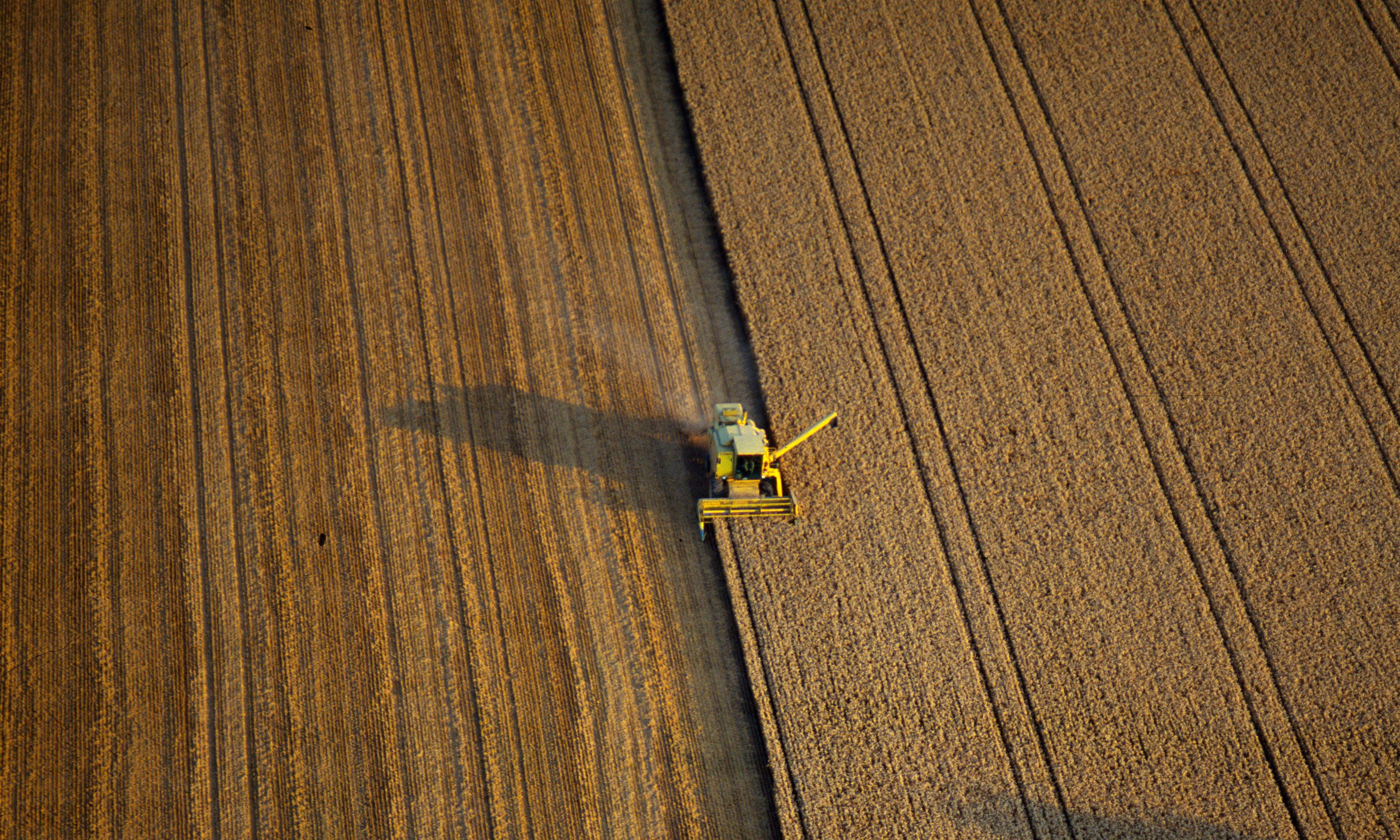 Food security plan after Brexit: biggest shake-up to farming in 40 years