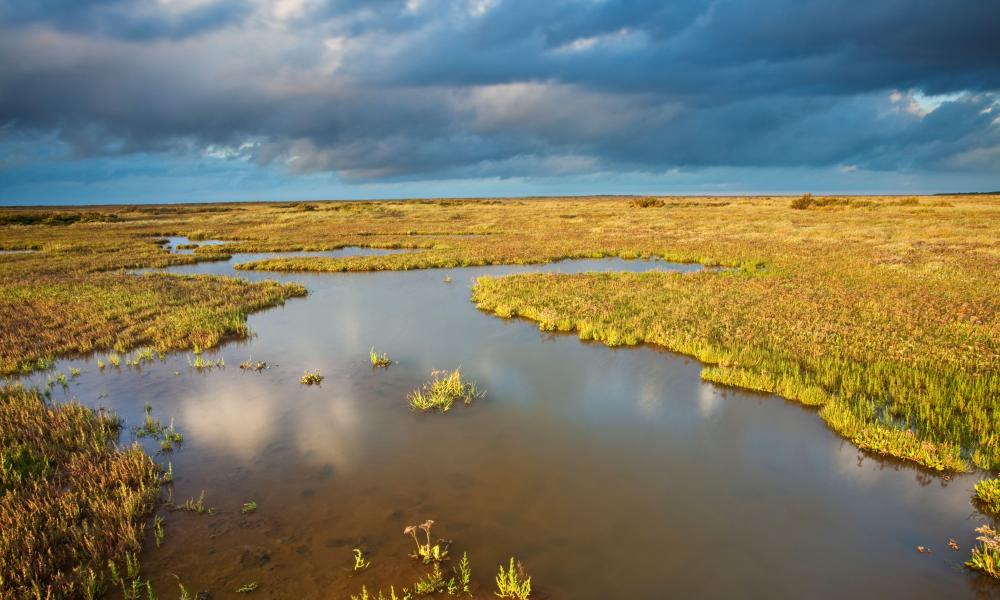 Salt marshes, such as at Stiffkey in north Norfolk, are valuable for their role in mitigating carbon emissions.