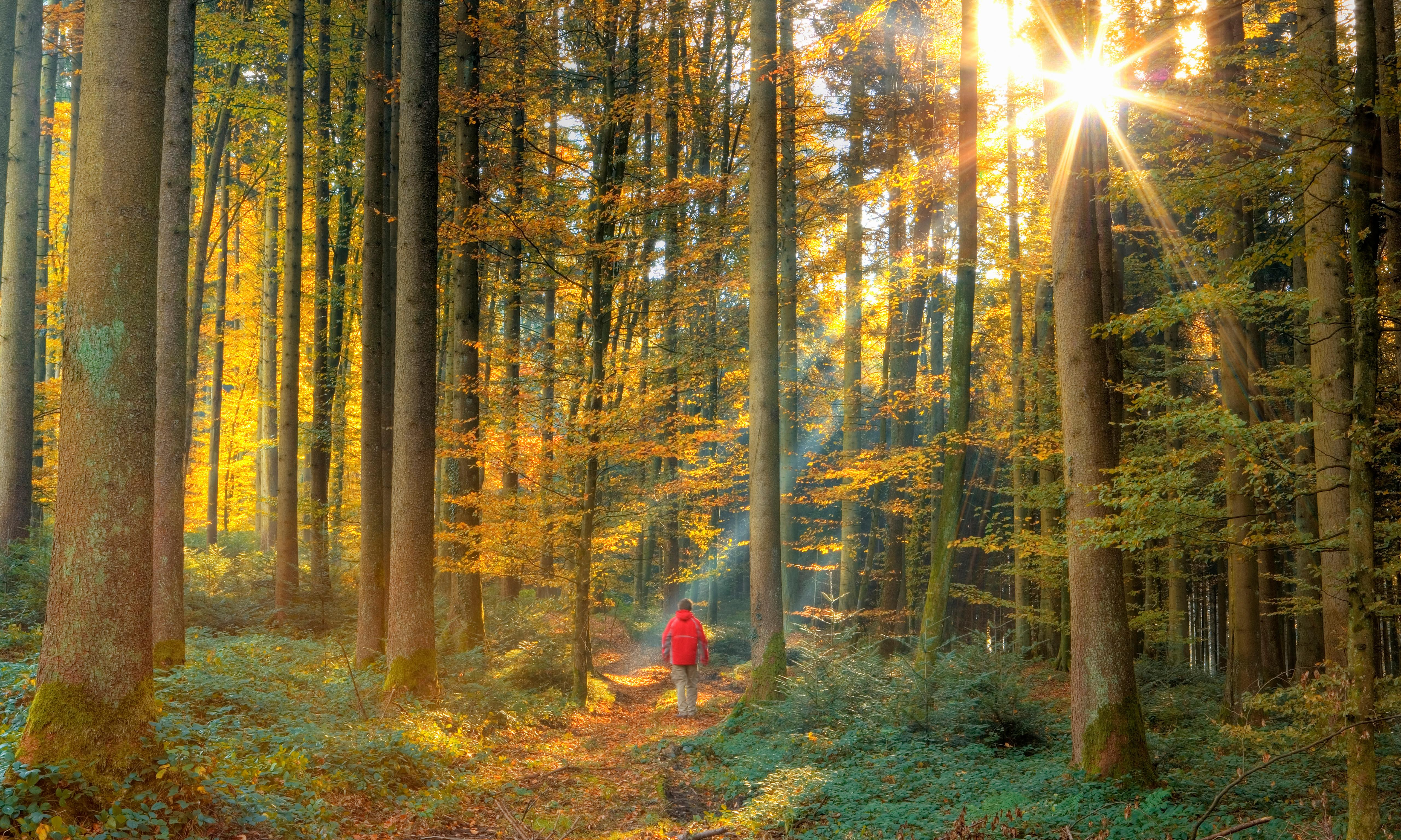 Backing the trillion tree campaign to combat climate crisis