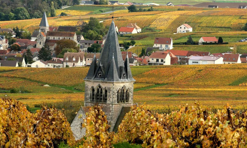 A champagne vineyard in the village of Ville-Dommange a few kilometres from Reims.