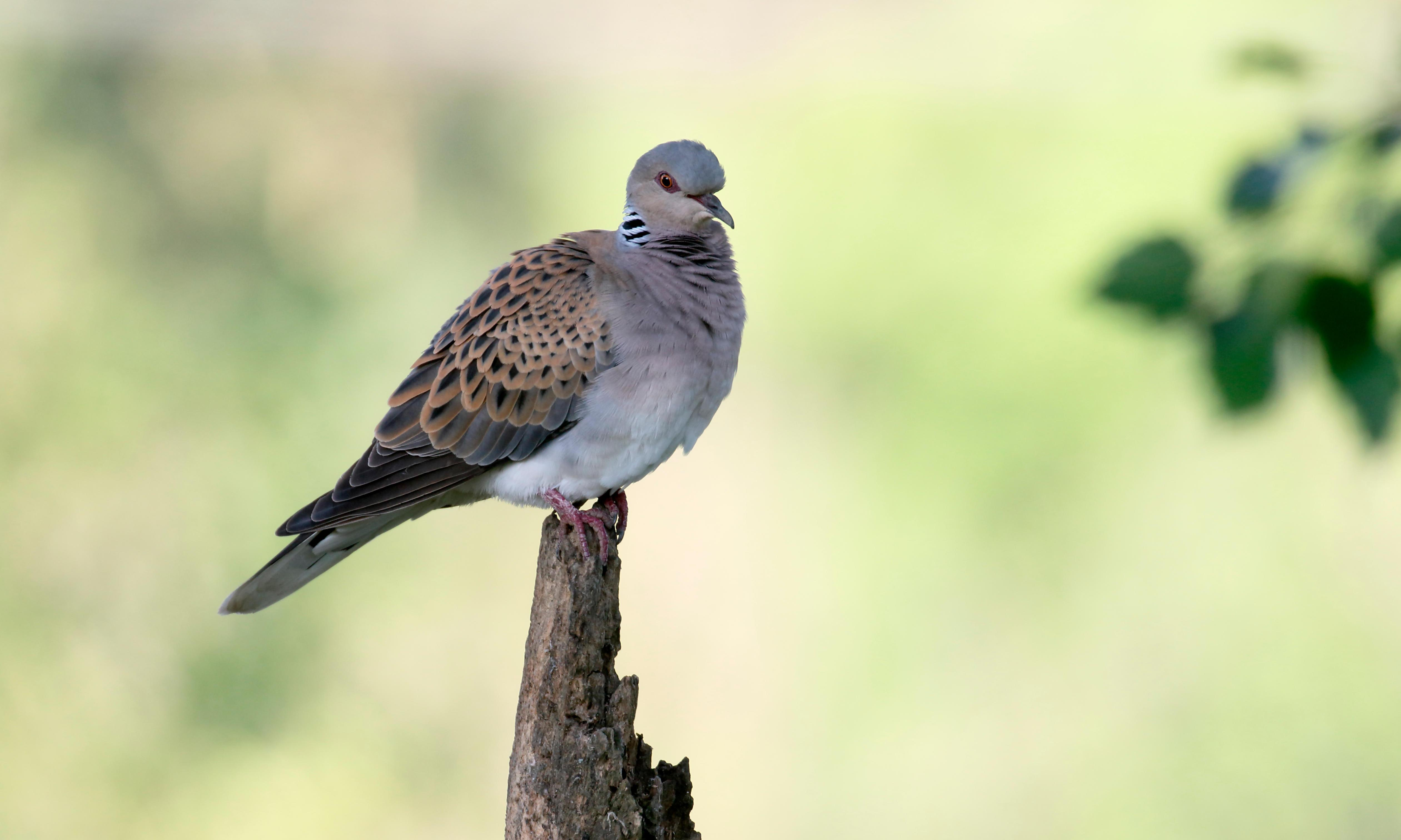EU acts to protect future of bird facing extinction in UK