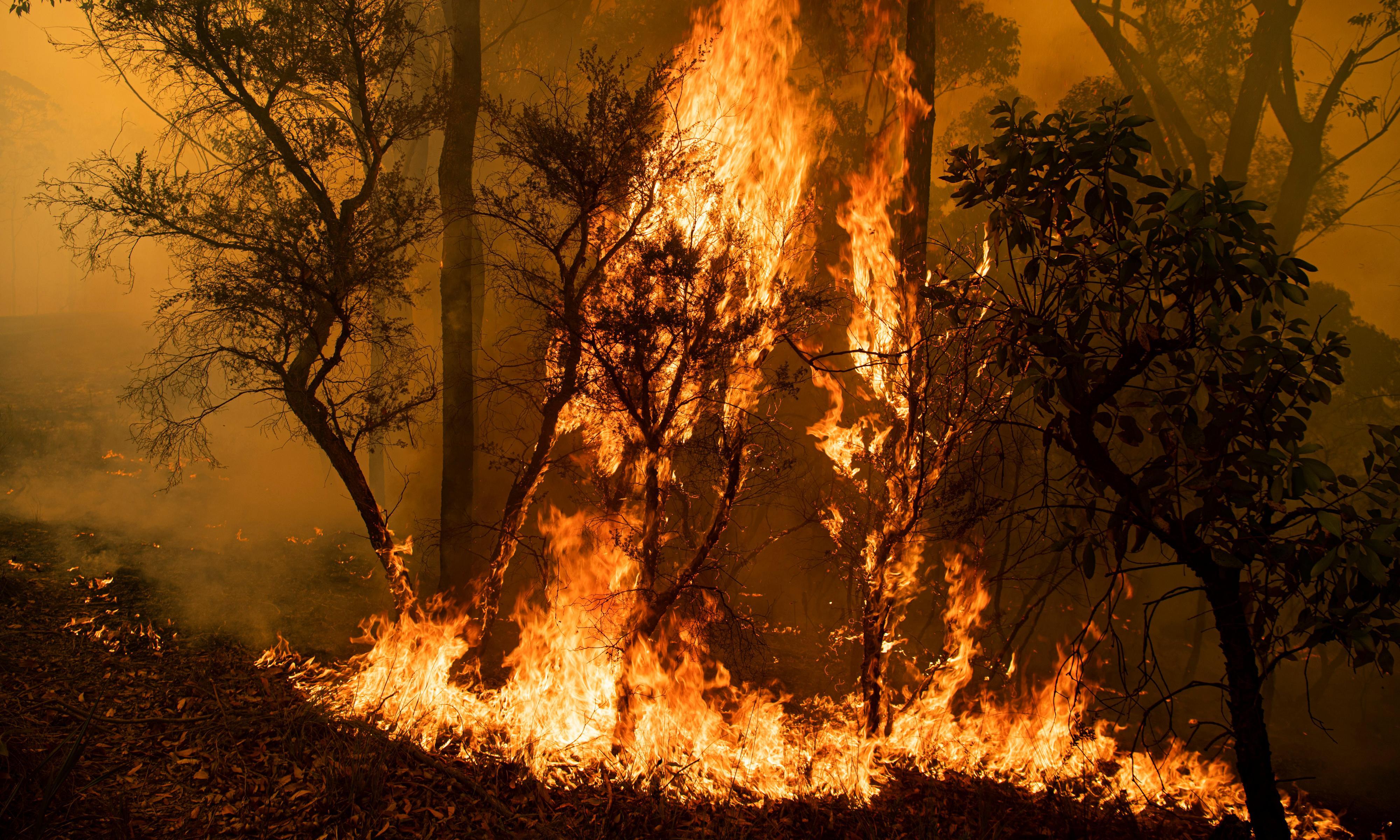 'Get the hell out of Dodge': the fight to save homes from the NSW central coast inferno