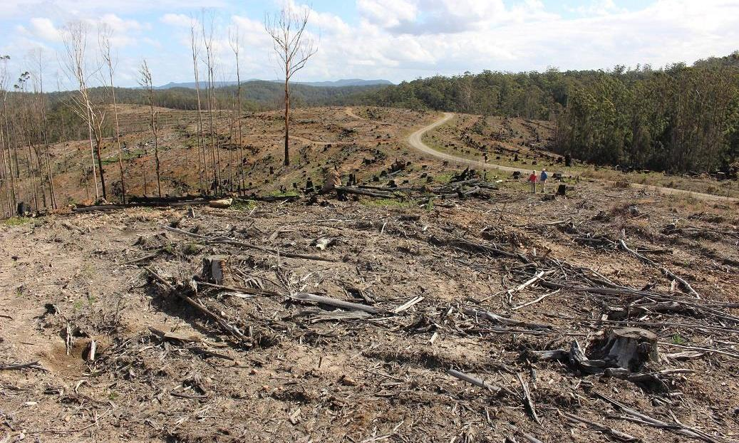 NSW remaps old growth forests to open up reserves to logging