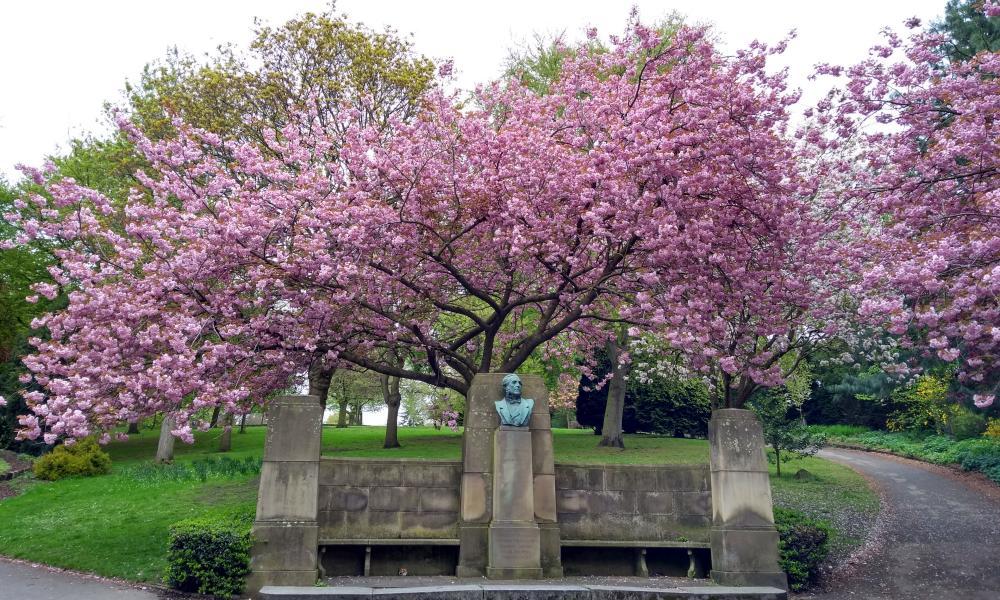 Pink blossom at Nottingham Arboretum