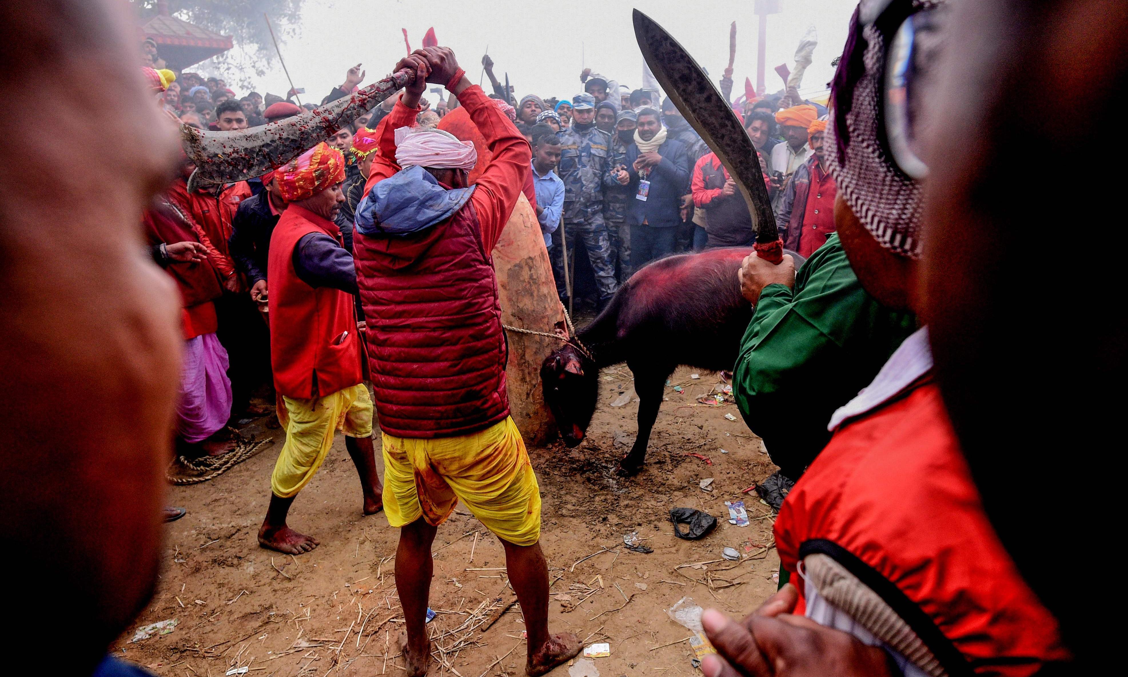 Nepal animal sacrifice festival pits devotees against activists