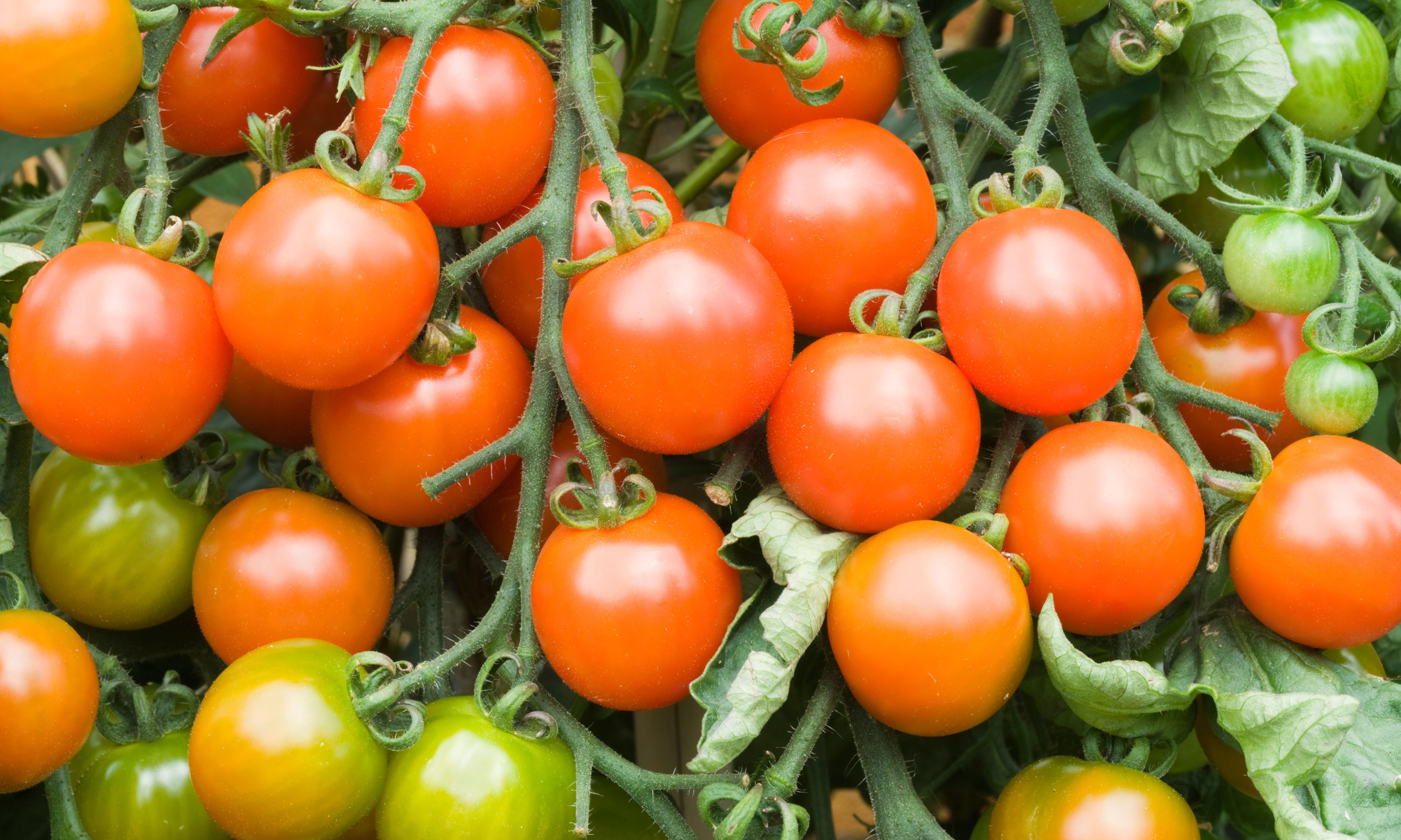 The five: genetically modified fruit