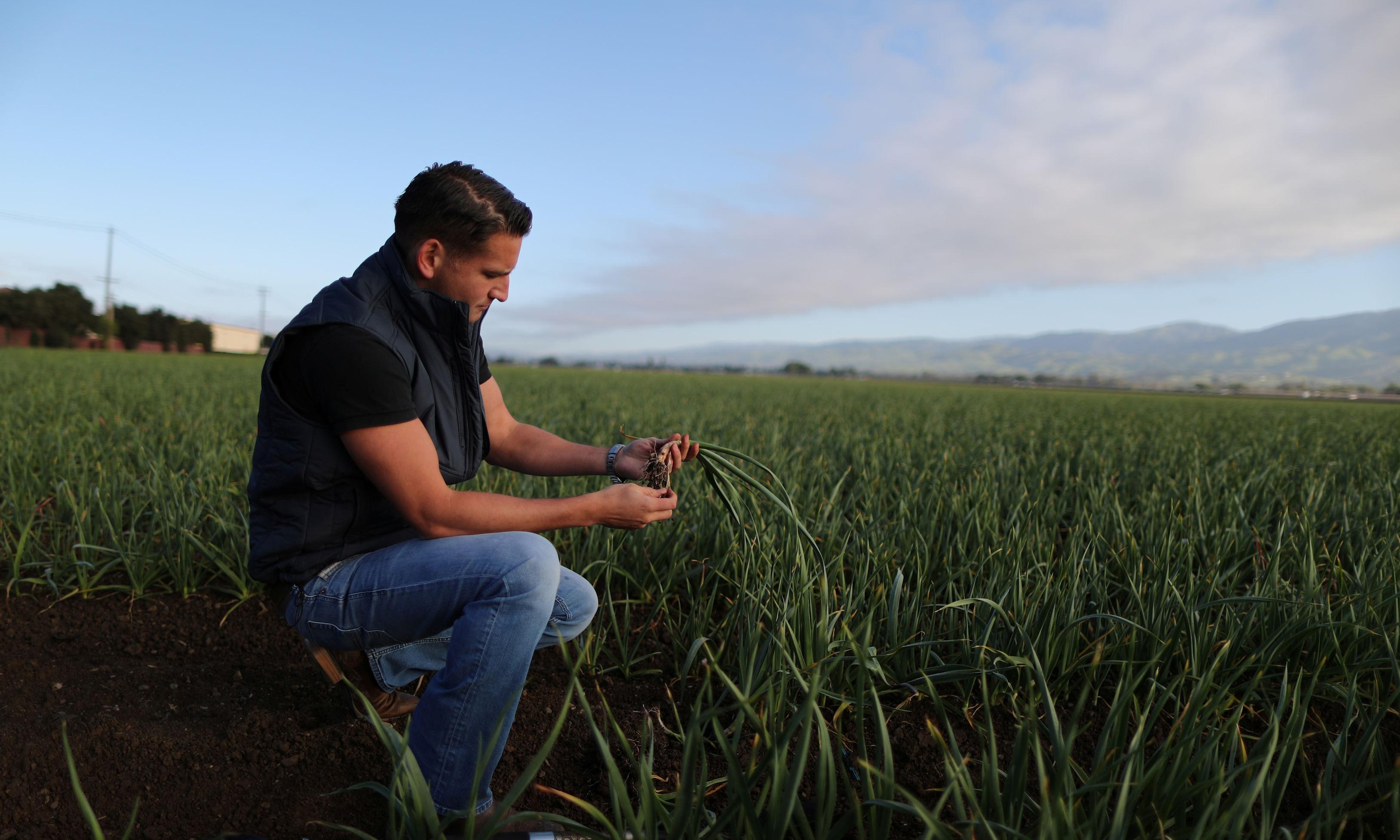 'We'd love tariffs to stay forever': garlic growers profit in Trump's trade war