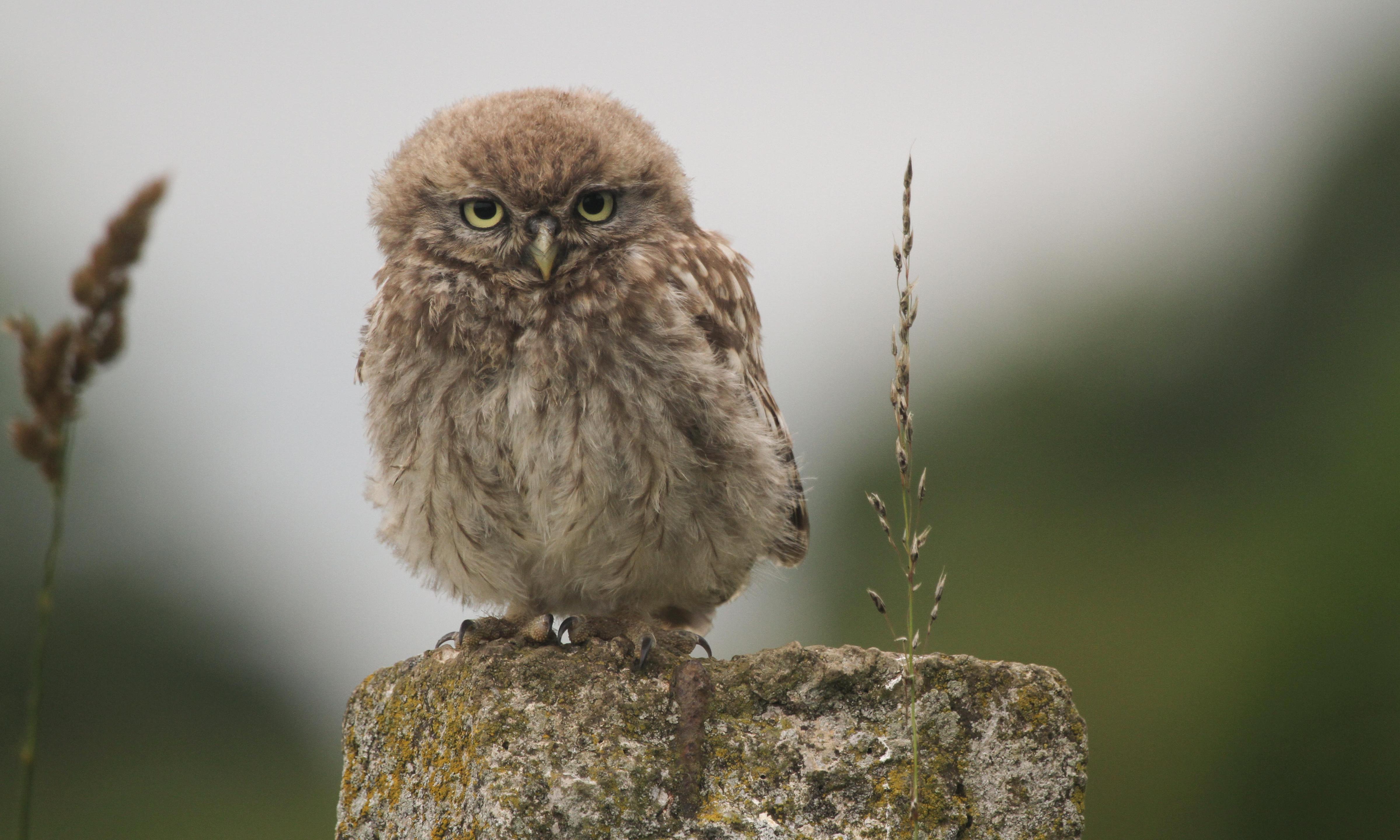 Birdwatch: owl be your baby tonight