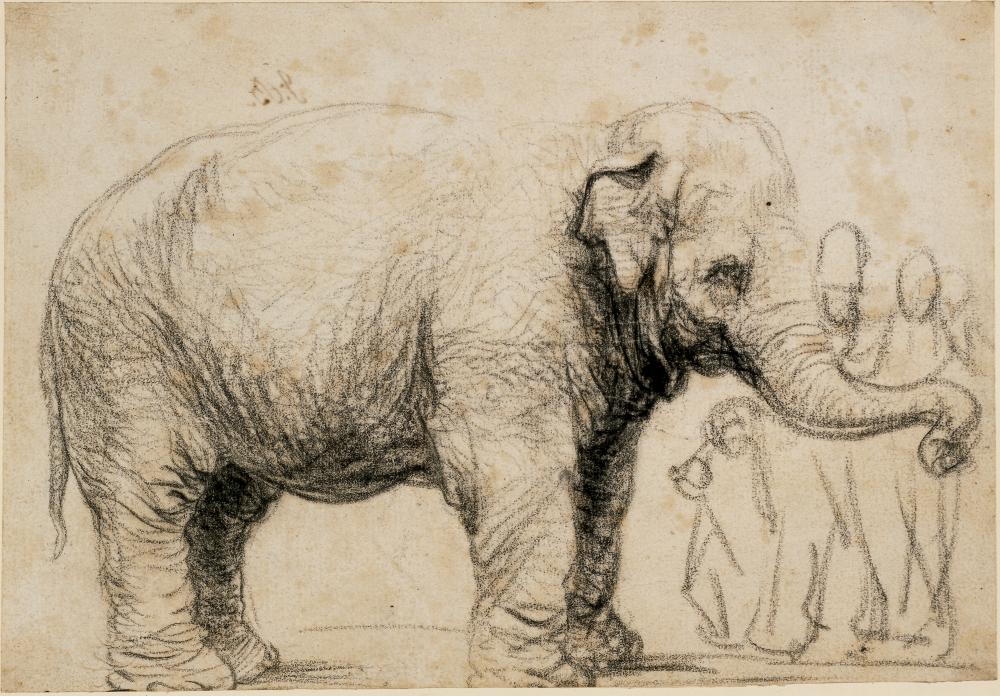An Asian elephant c1637 by Rembrandt.
