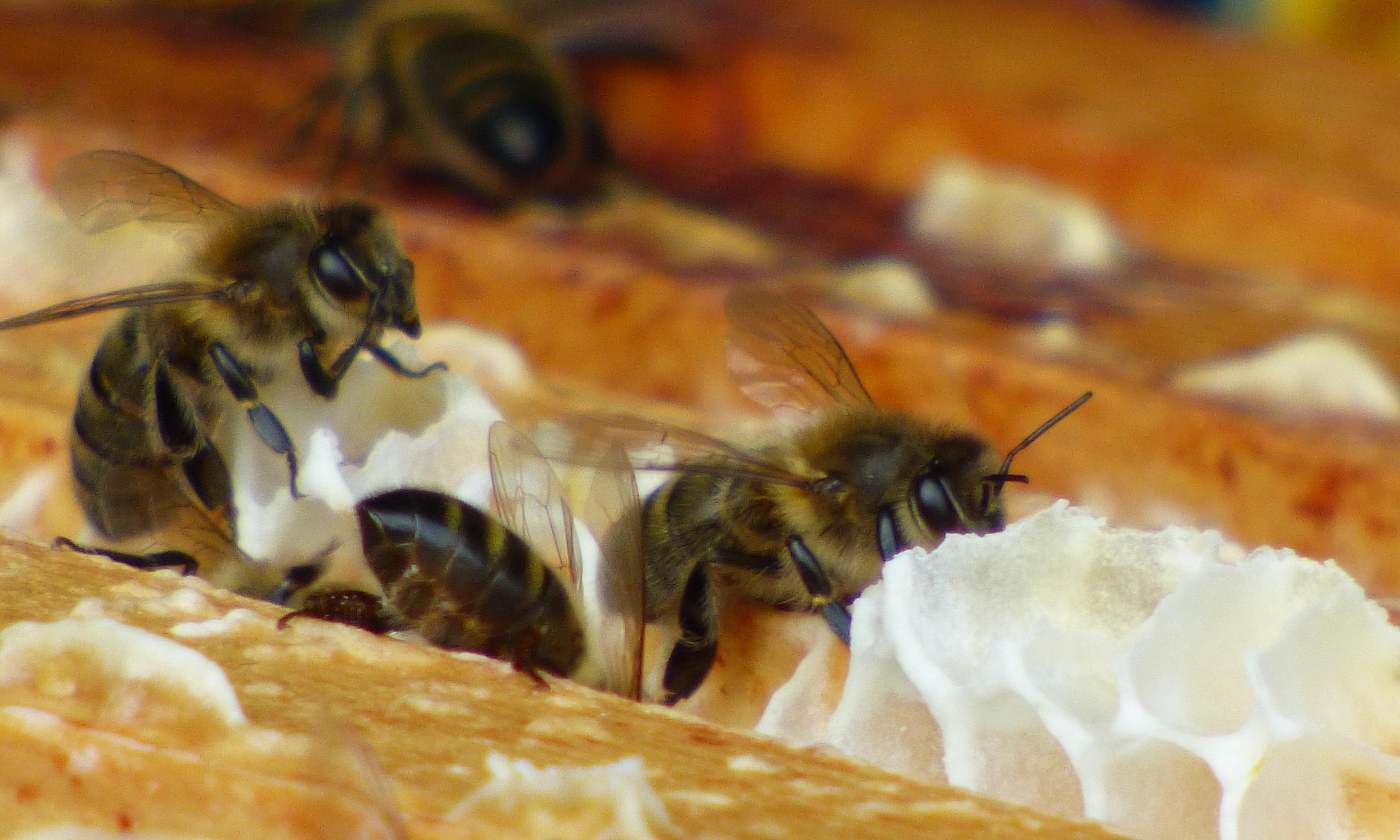 National Beekeeping Centre Wales, Conwy: 'Connect kids with ecology – because the bees need us' – review