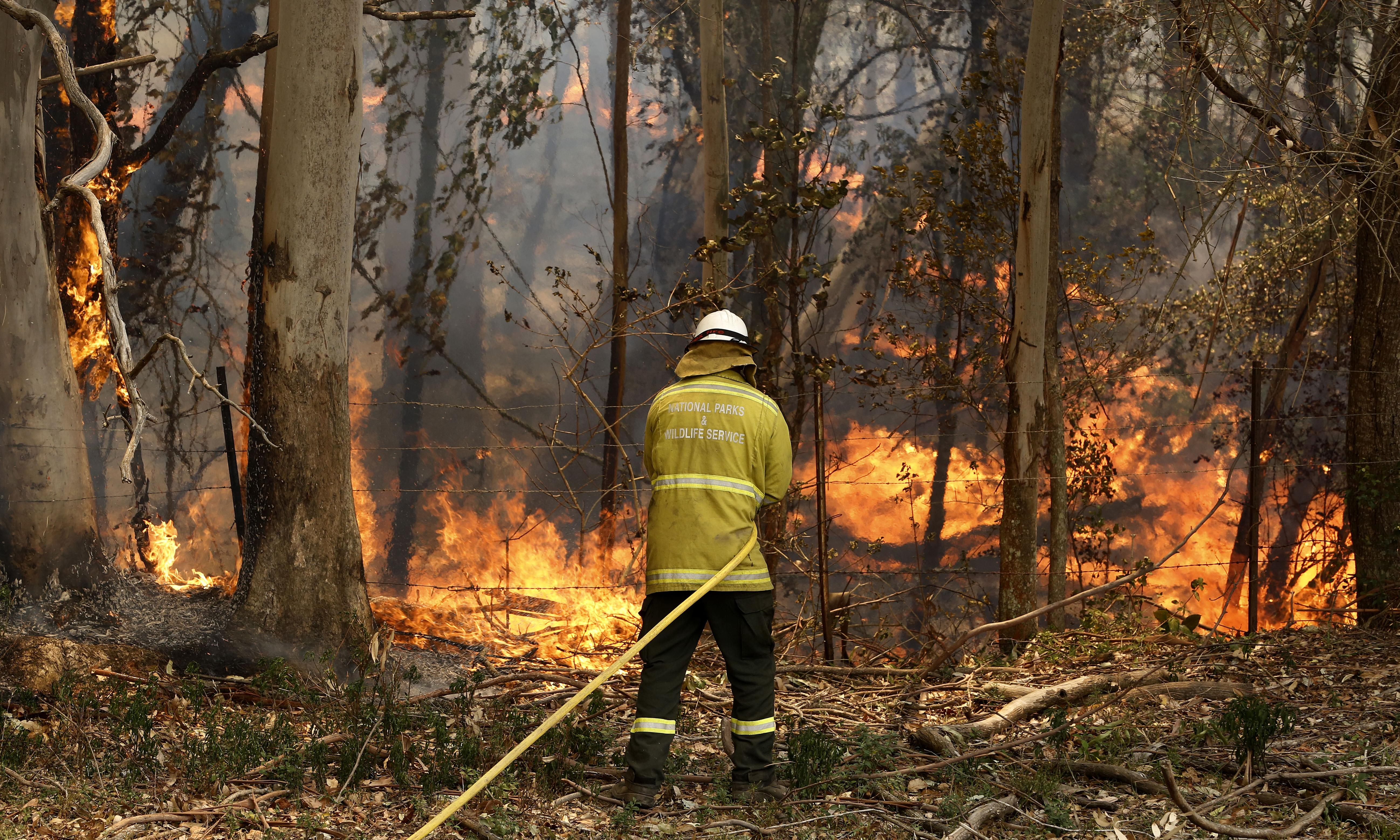 Factcheck: how park ranger numbers stack up amid debate over bushfire readiness