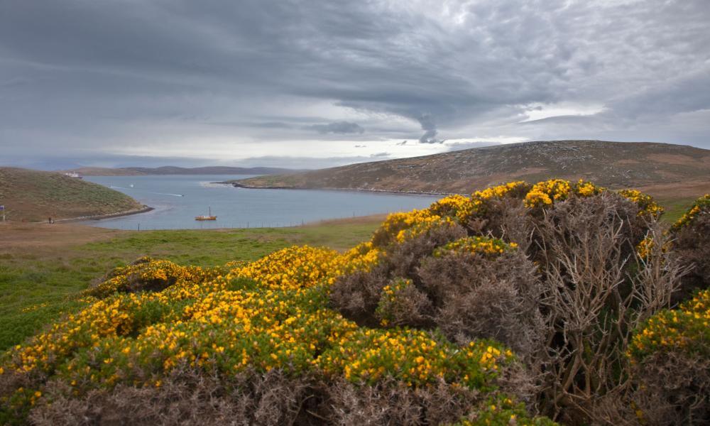 West Point Island, Falklands.