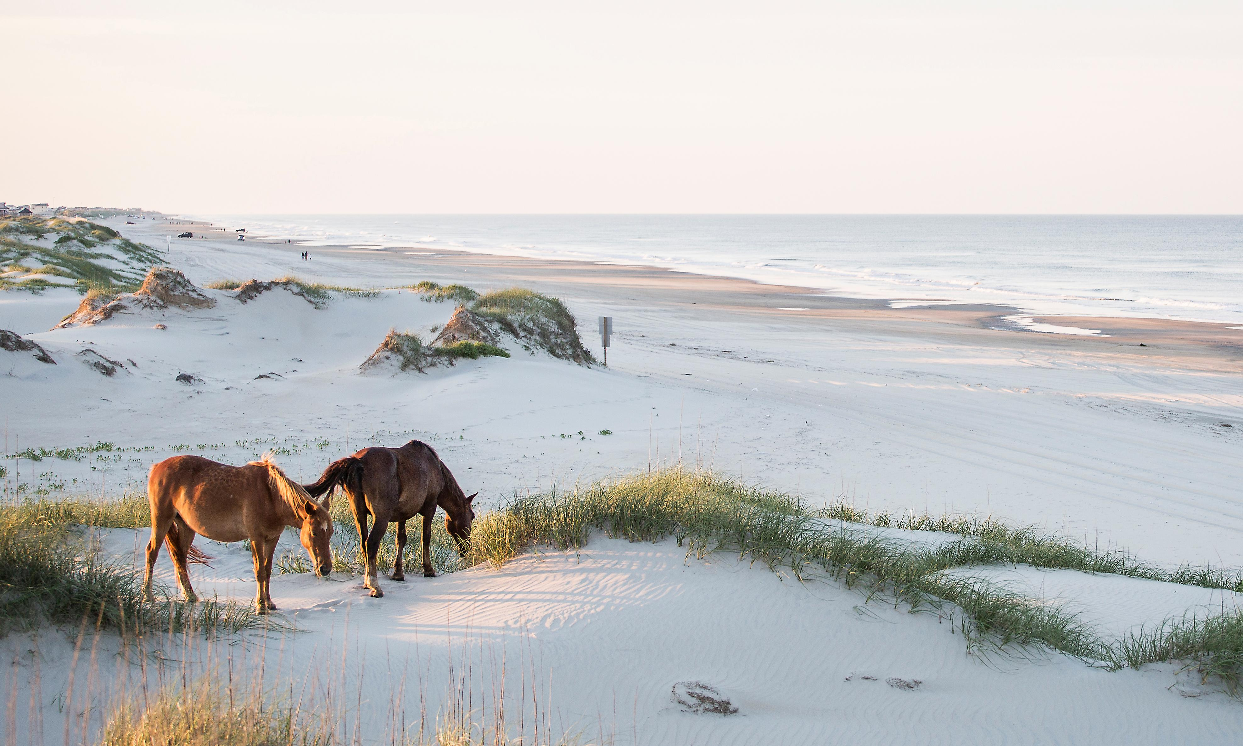 North Carolina's islands: the beauty of the Outer Banks