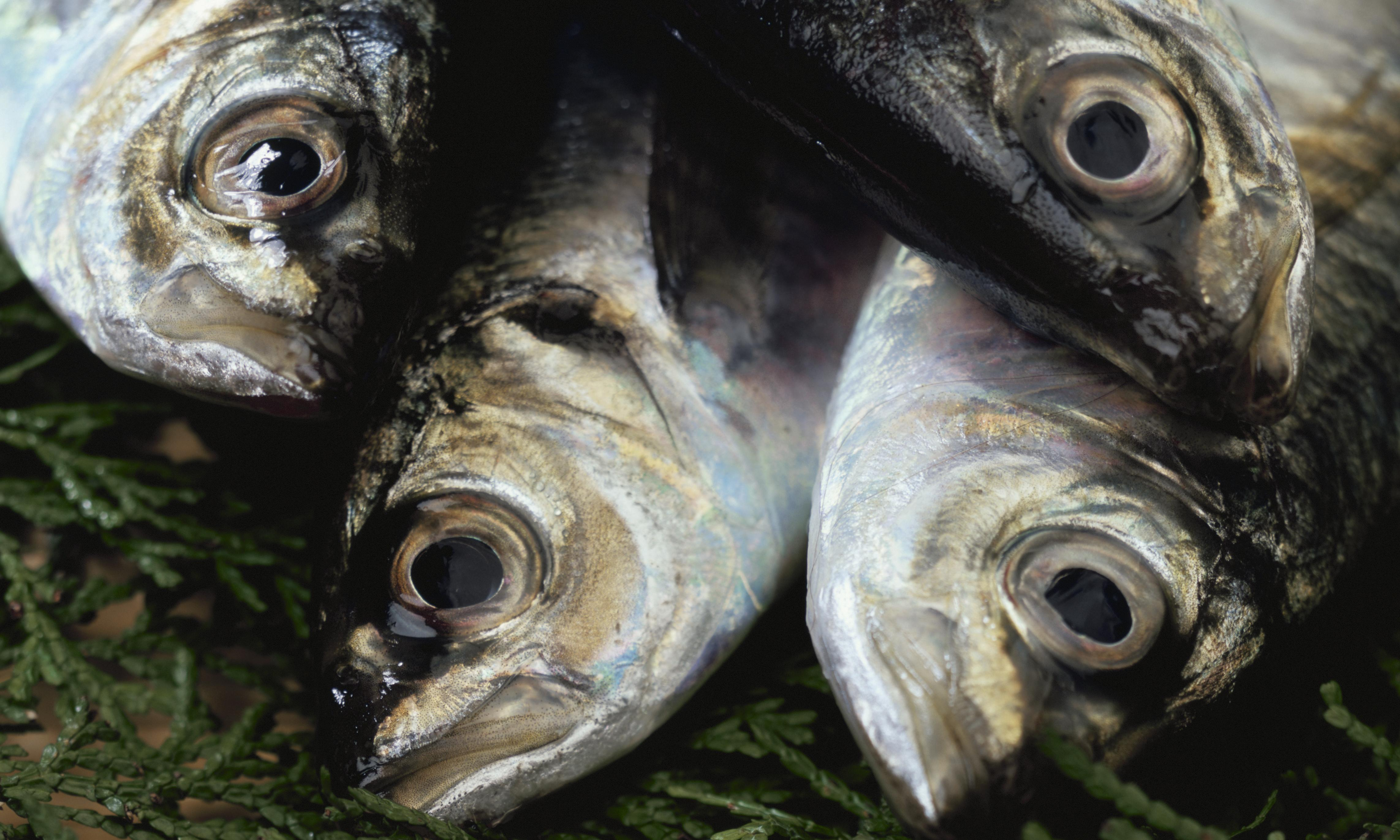 Bribery allegations over fishing rights rock Iceland and Namibia