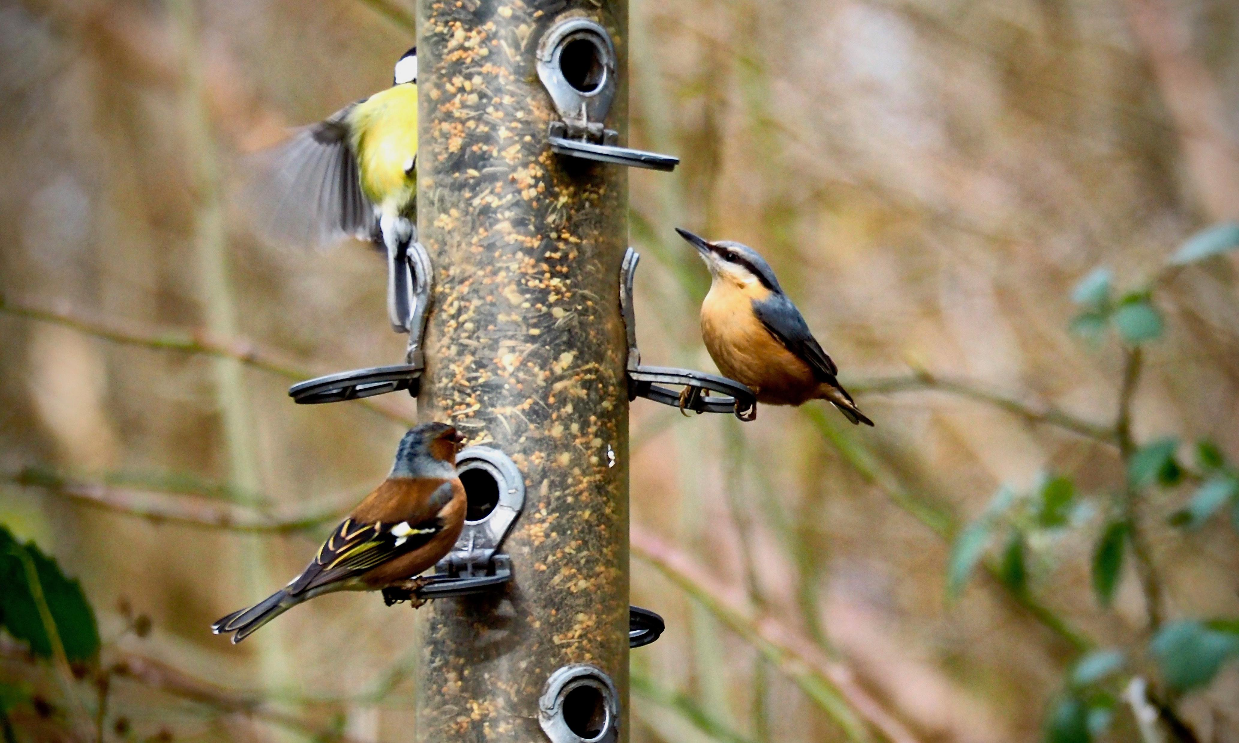 Country diary: the gatherings at the bird feeder are anything but random