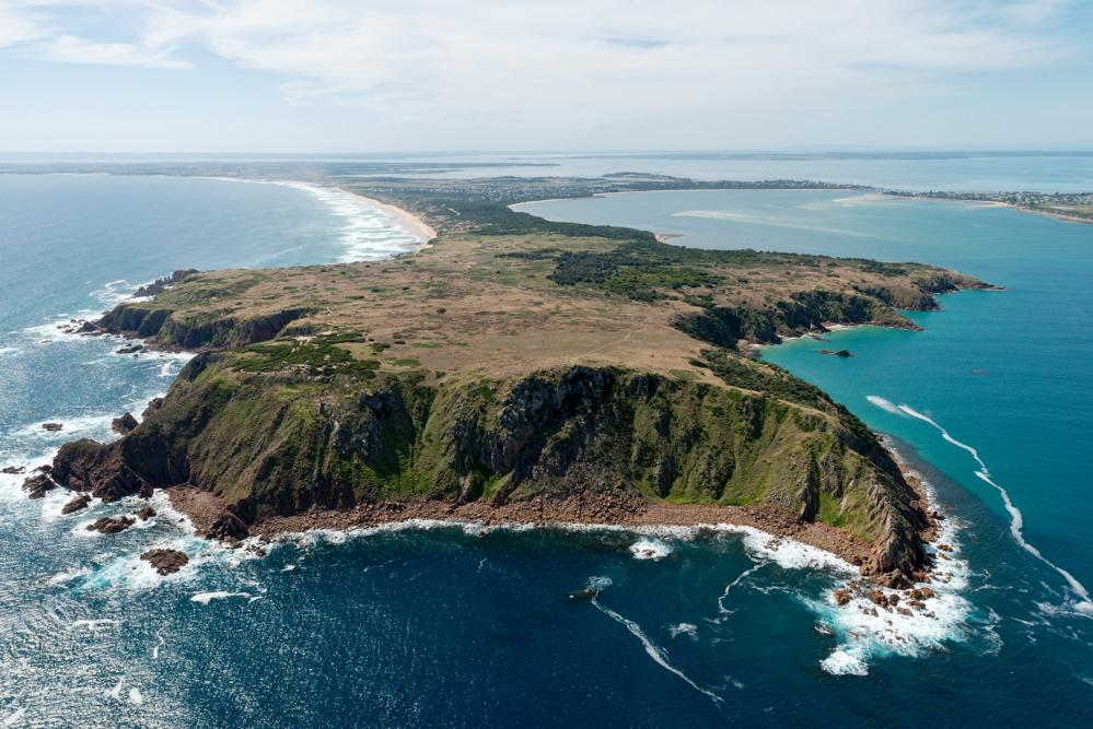 Cape Woolamai is home to half a million mutton birds.