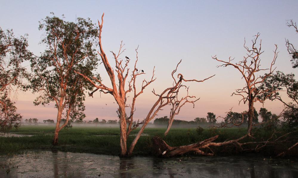 Yellow Water billabong at Kakadu national park, in Australia's Northern Territory.