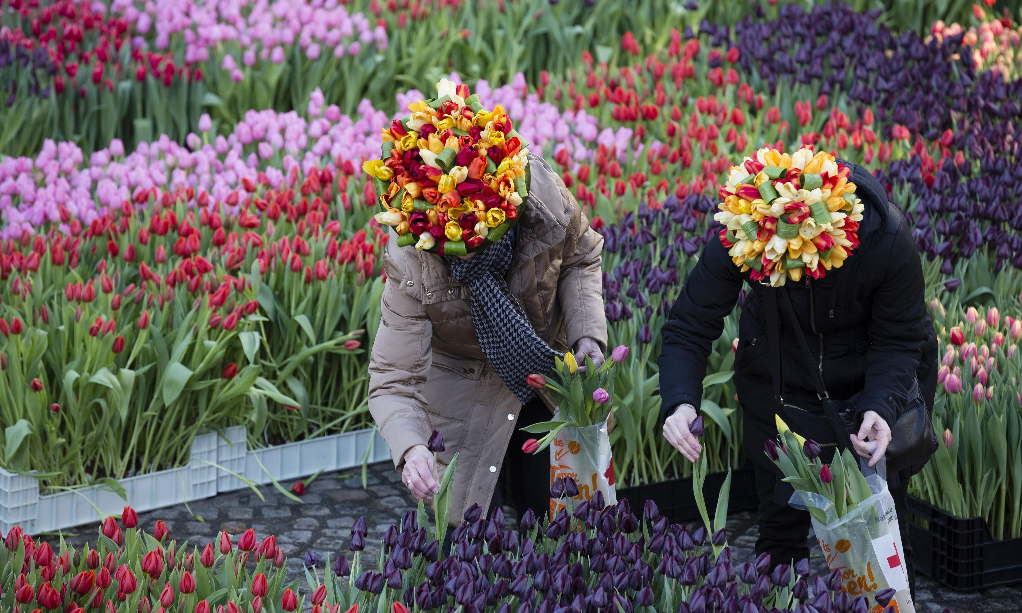 Blooming fakes: Amsterdam tourists hit by tulip scam