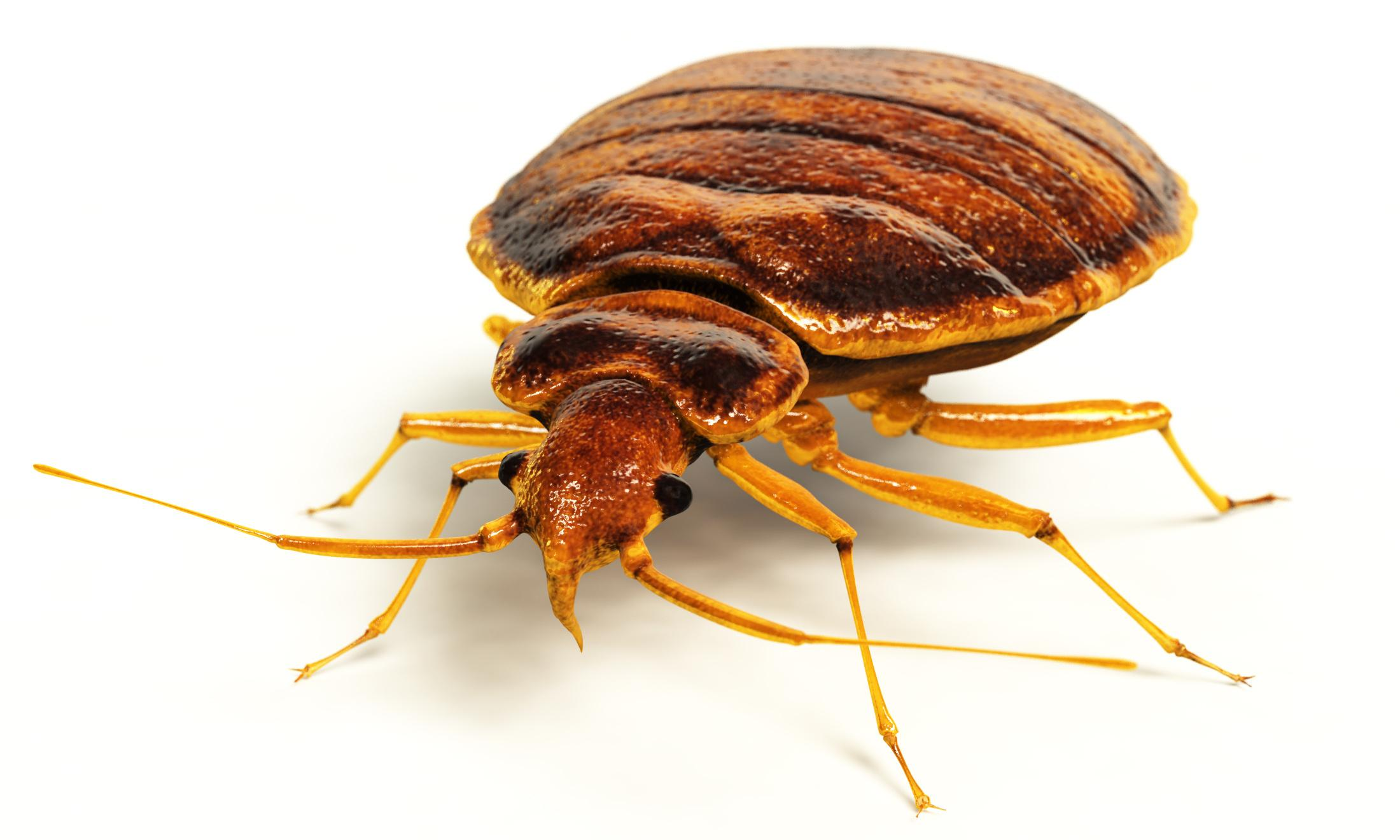Chainsaws, fire and paranoia: my total bedbug meltdown