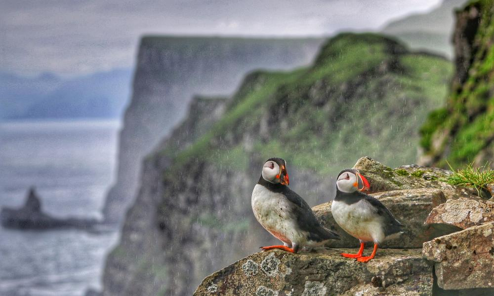 Two puffins in wet weather on Mykines