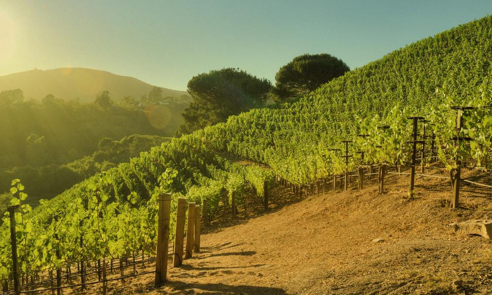 The climate and soil of Moraga vineyard are similar to Bordeaux rather than Napa, says the estates winemaker.
