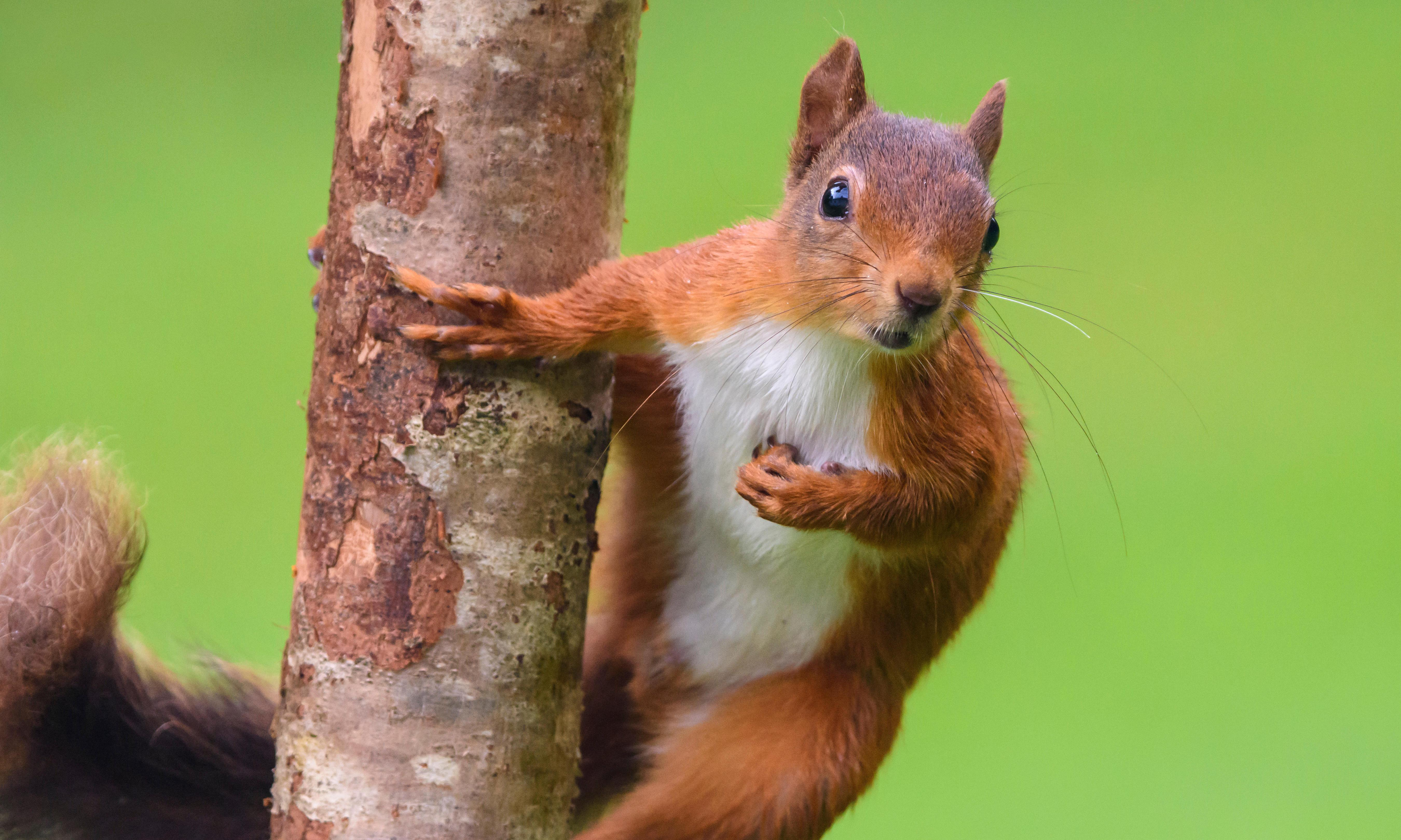 From Google-jacking to dead squirrels: the online tricks of electioneering