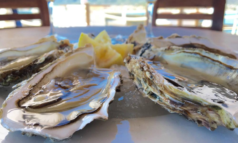 a lunch of just-dived Oysters at Musclarium