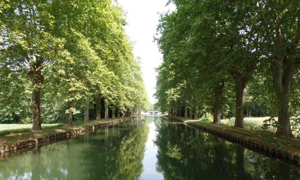 Superb views on the Canal du Rhône au Rhin, with lovely light, reflective water and trees.