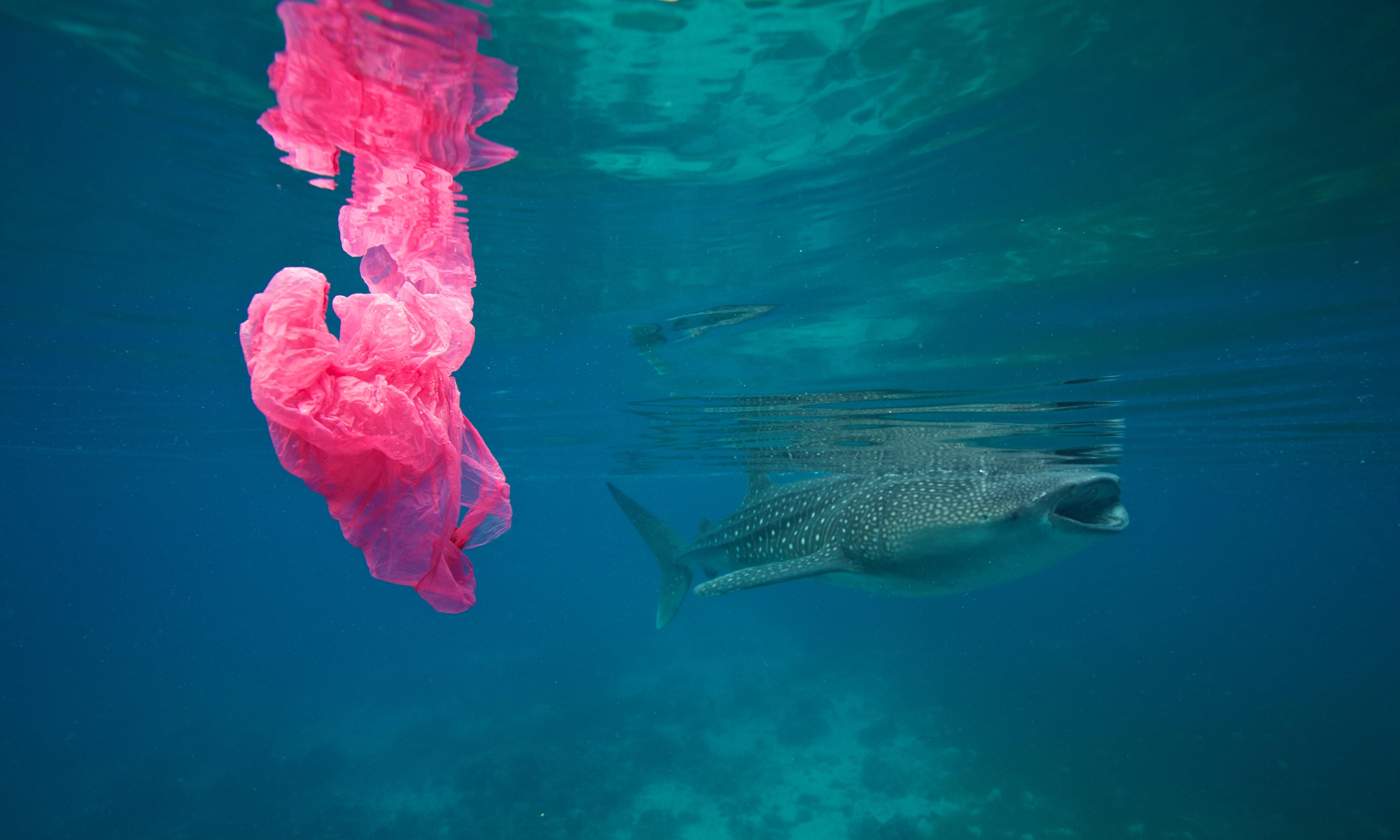 Single-use plastics a serious climate change hazard, study warns
