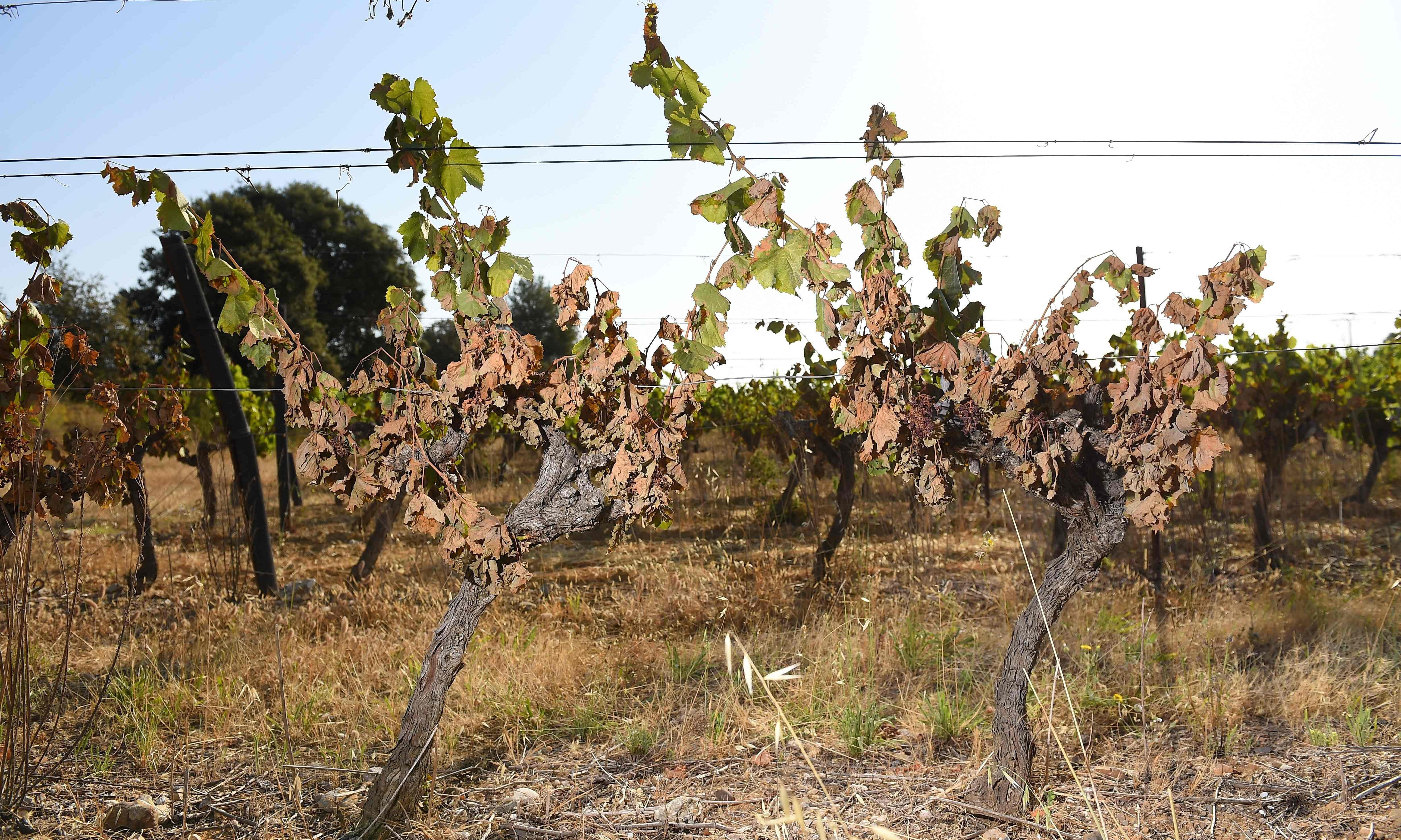 Extreme weather to blame as France's wine output set to fall by 12%
