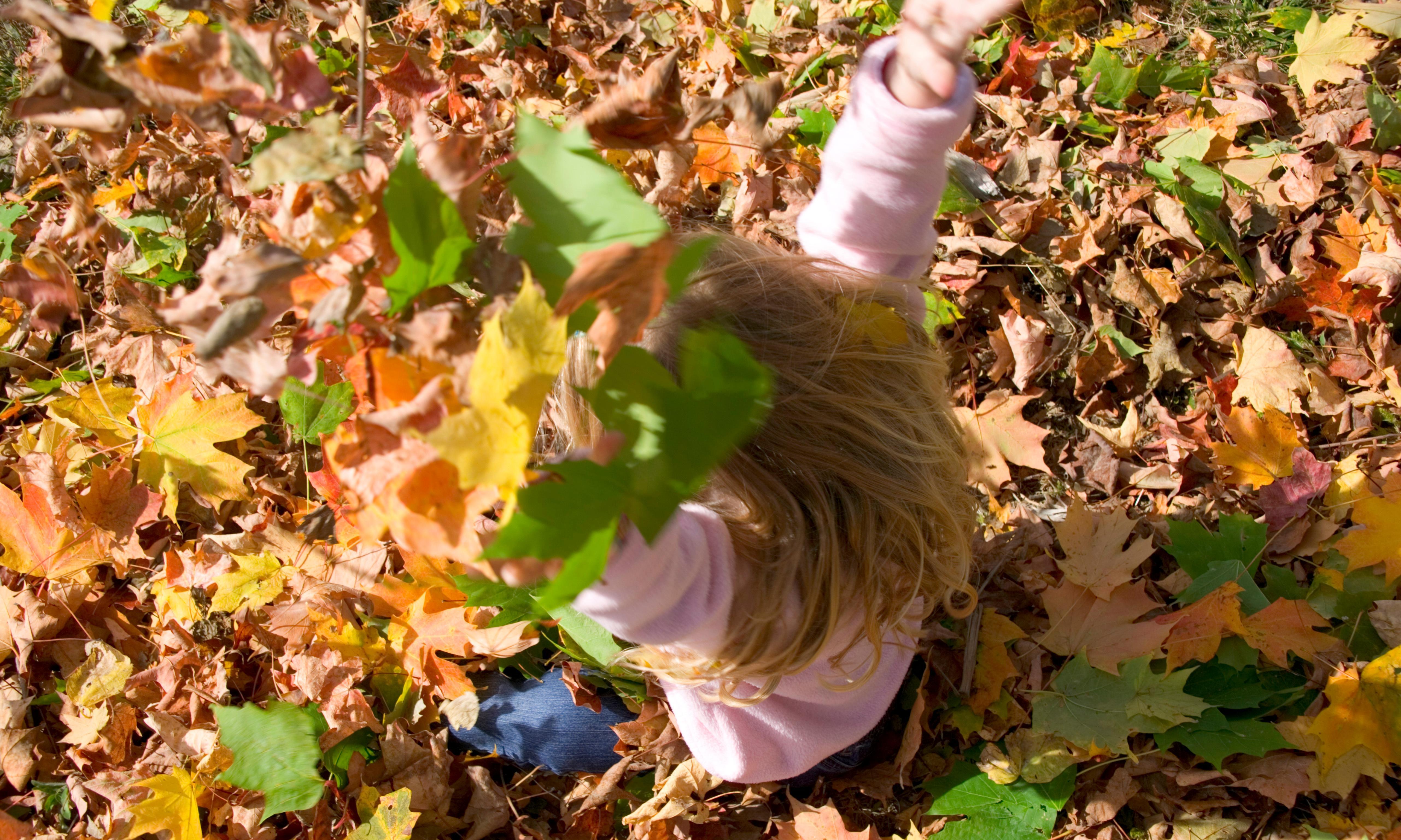 Chekhov and Georgia O'Keeffe loved autumn leaves, and so do I
