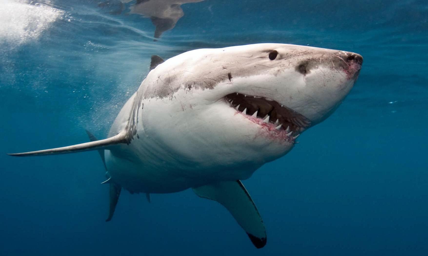 Man bitten on the leg by shark while surfing near Byron Bay