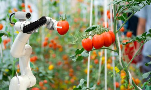 Robotic farmers in agriculture spray chemical fertiliser.