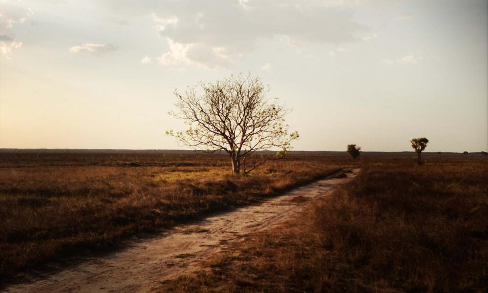 The dry lands of Kakadu national park just before the wet season begins.