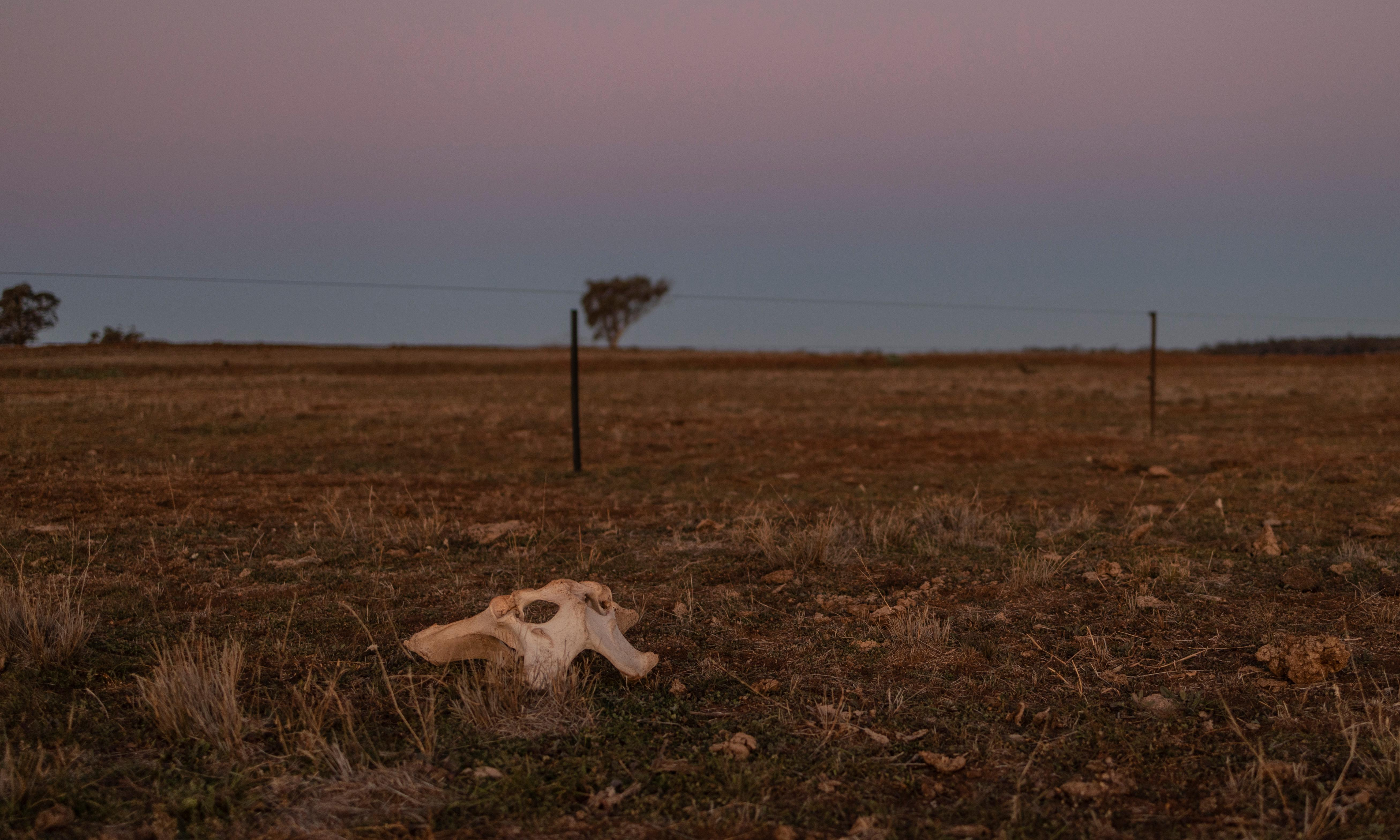 Australians increasingly fear climate change related drought and extinctions