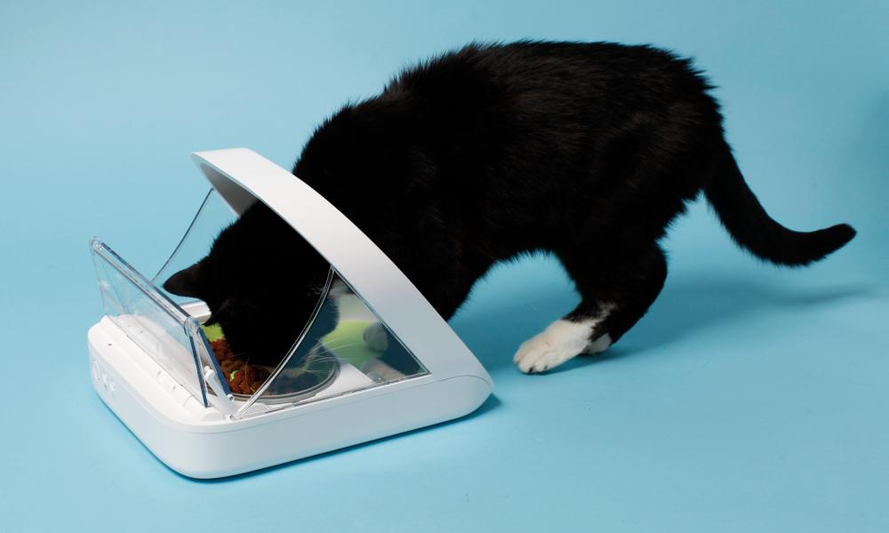 The Surefeed pet feeder makes sure everyone gets their fair share
