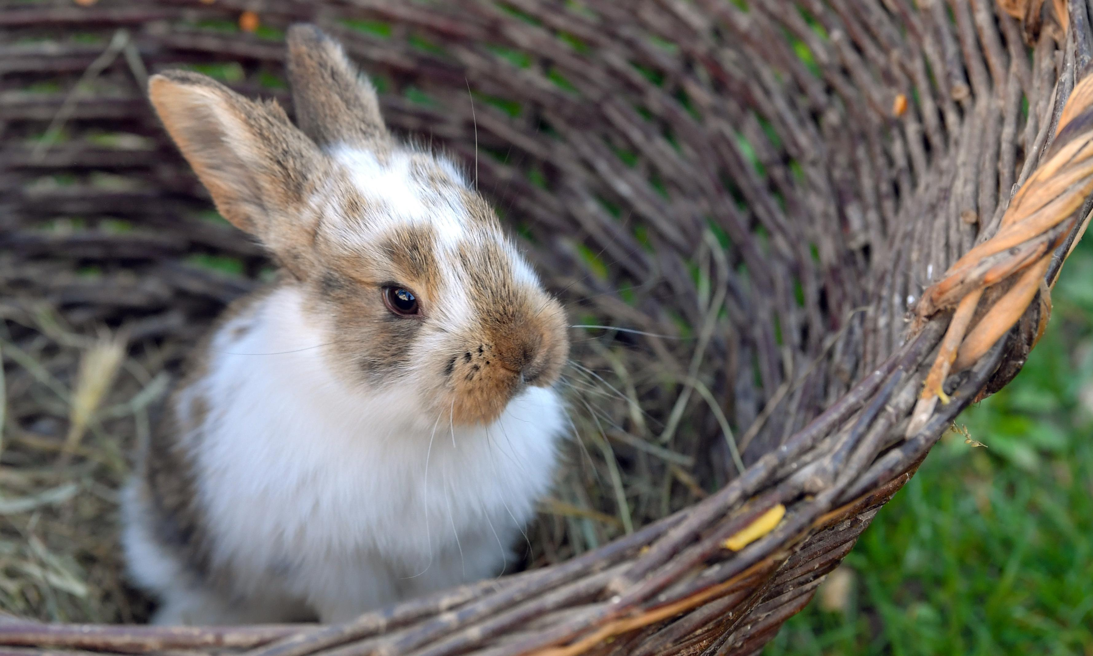 Ben-Fur: Romans brought rabbits to Britain, experts discover