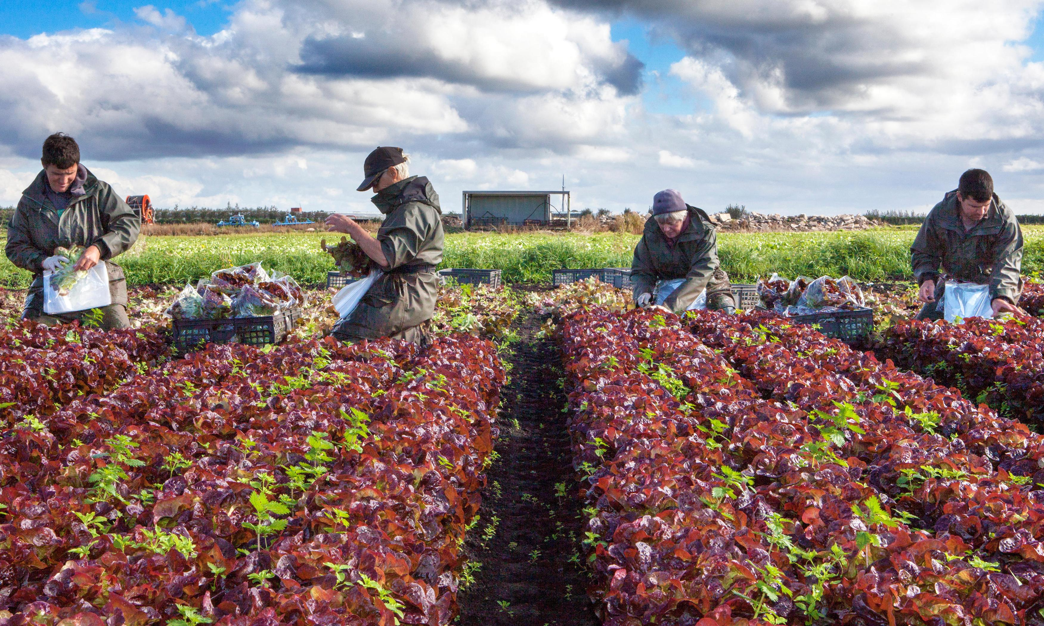 New immigration rules: where will UK find its drivers and pickers?