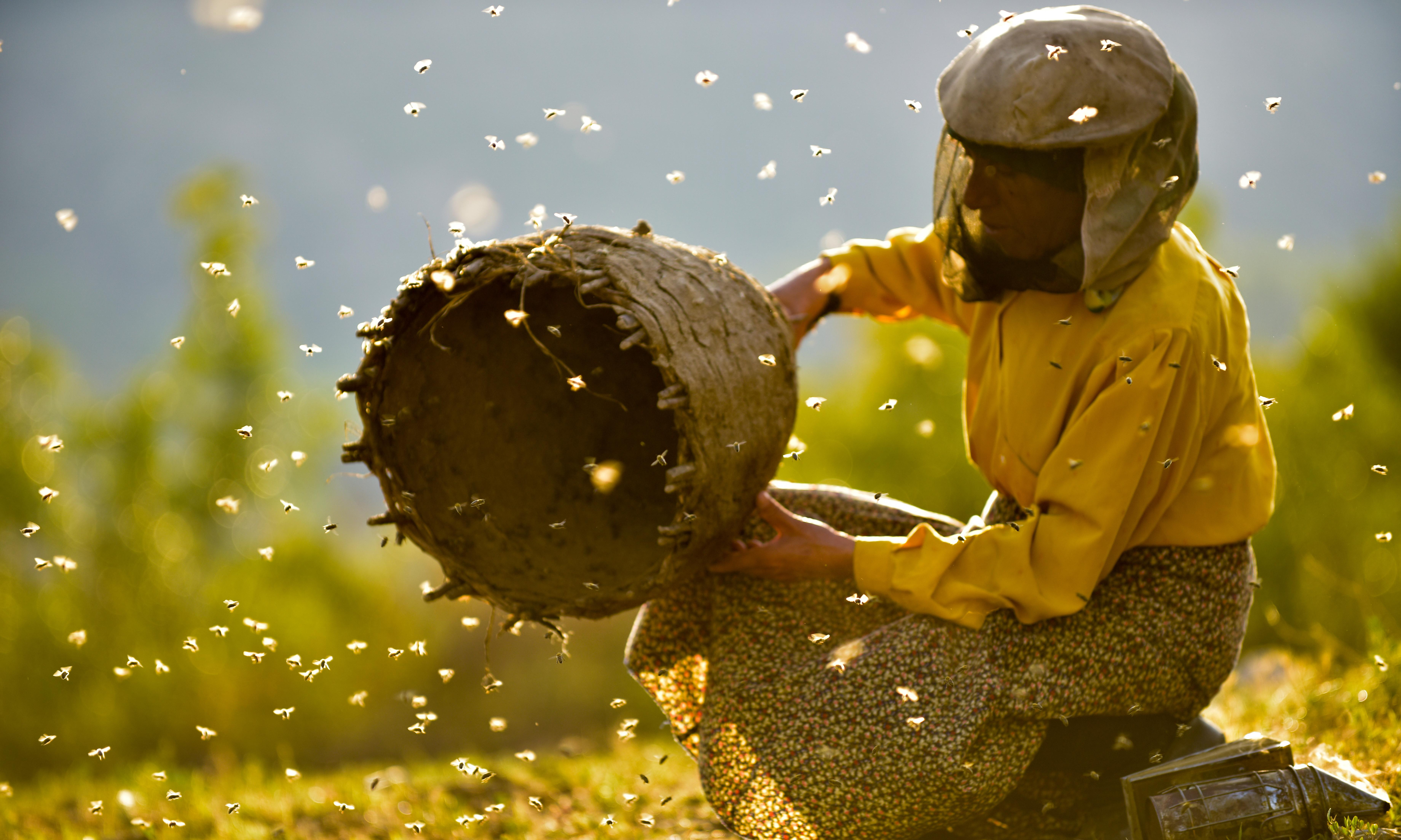 Honeyland review – beekeeper's life with a sting in the tale